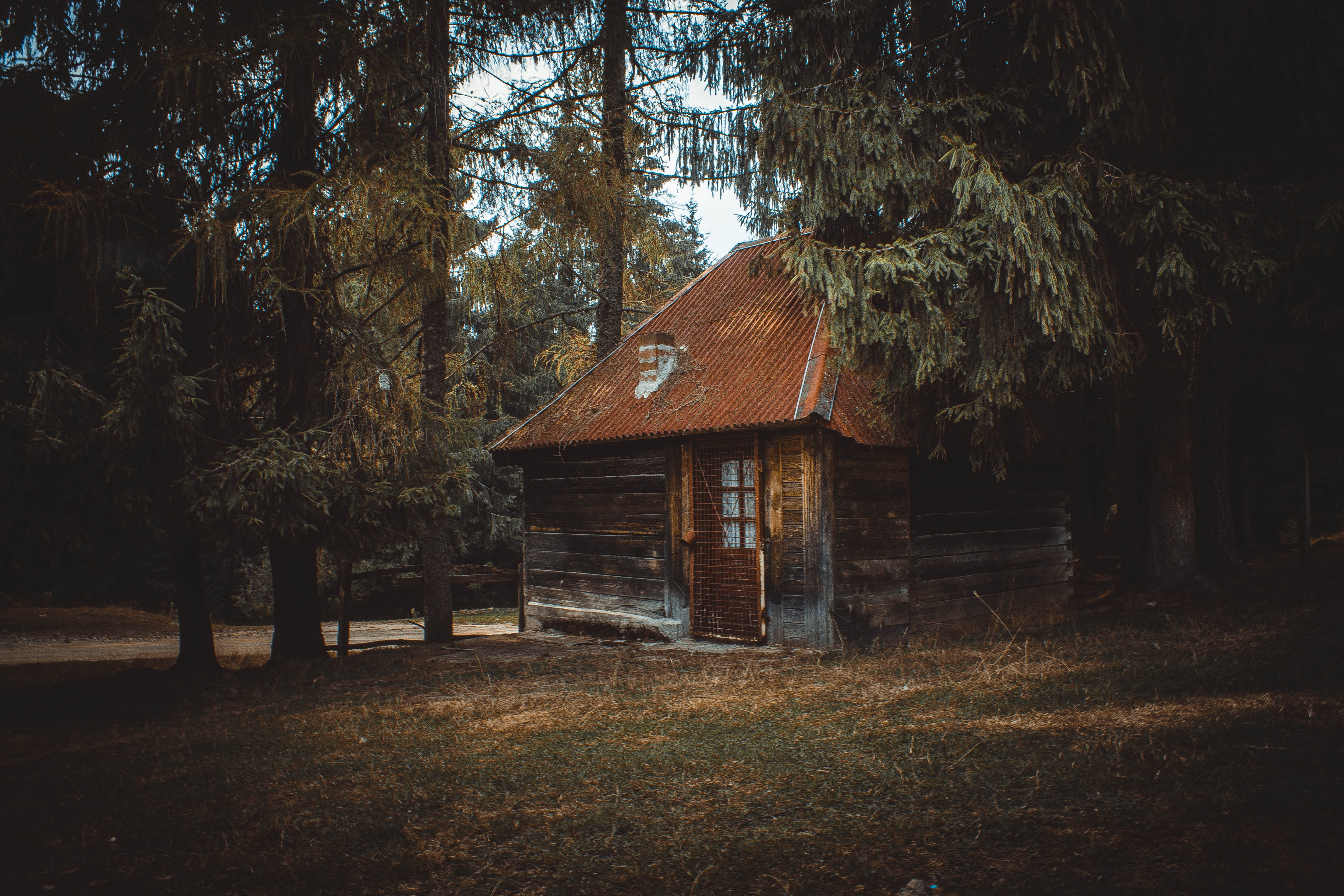 wooden house on a forest 183 free stock photo