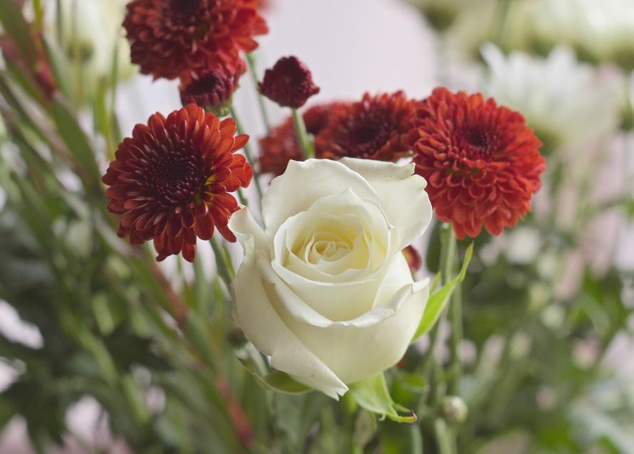 2018 Photos flowers-petals-gift-