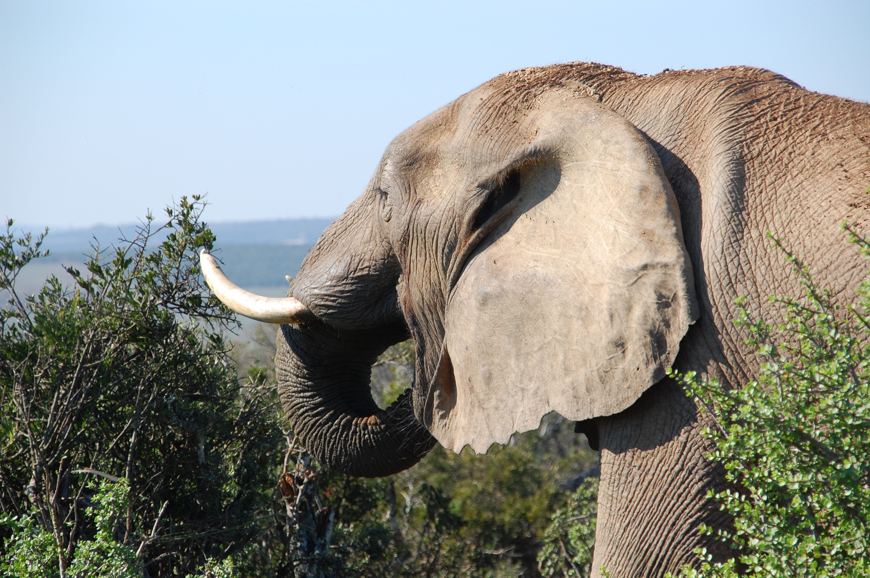 grey elephant by the bushes at mountain top during daytime free