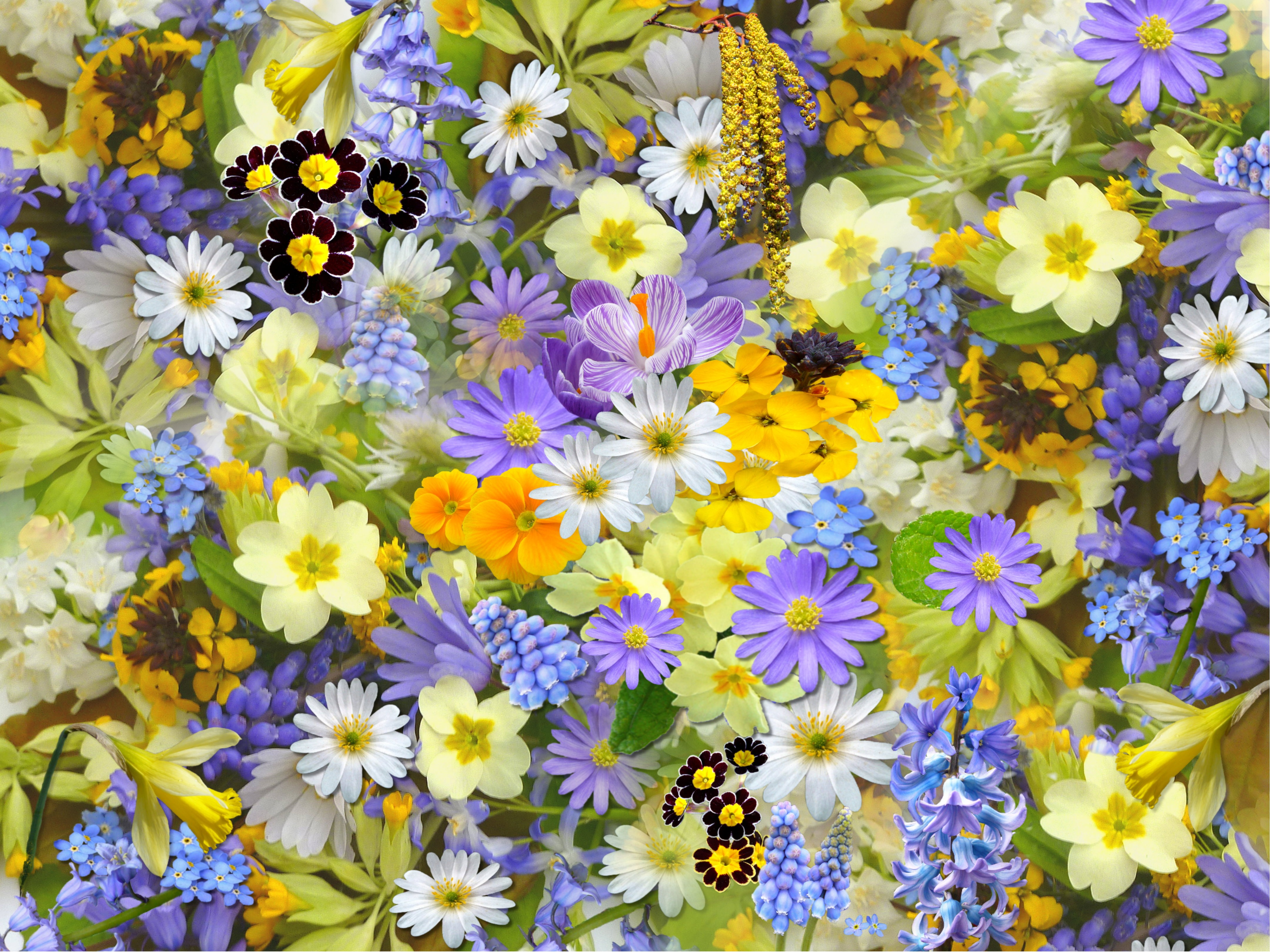spring-flowers-flowers-collage-floral-68507.jpeg (4320×3240)