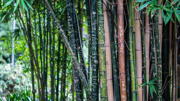 Green Leaf Bamboo Tree at Daytime