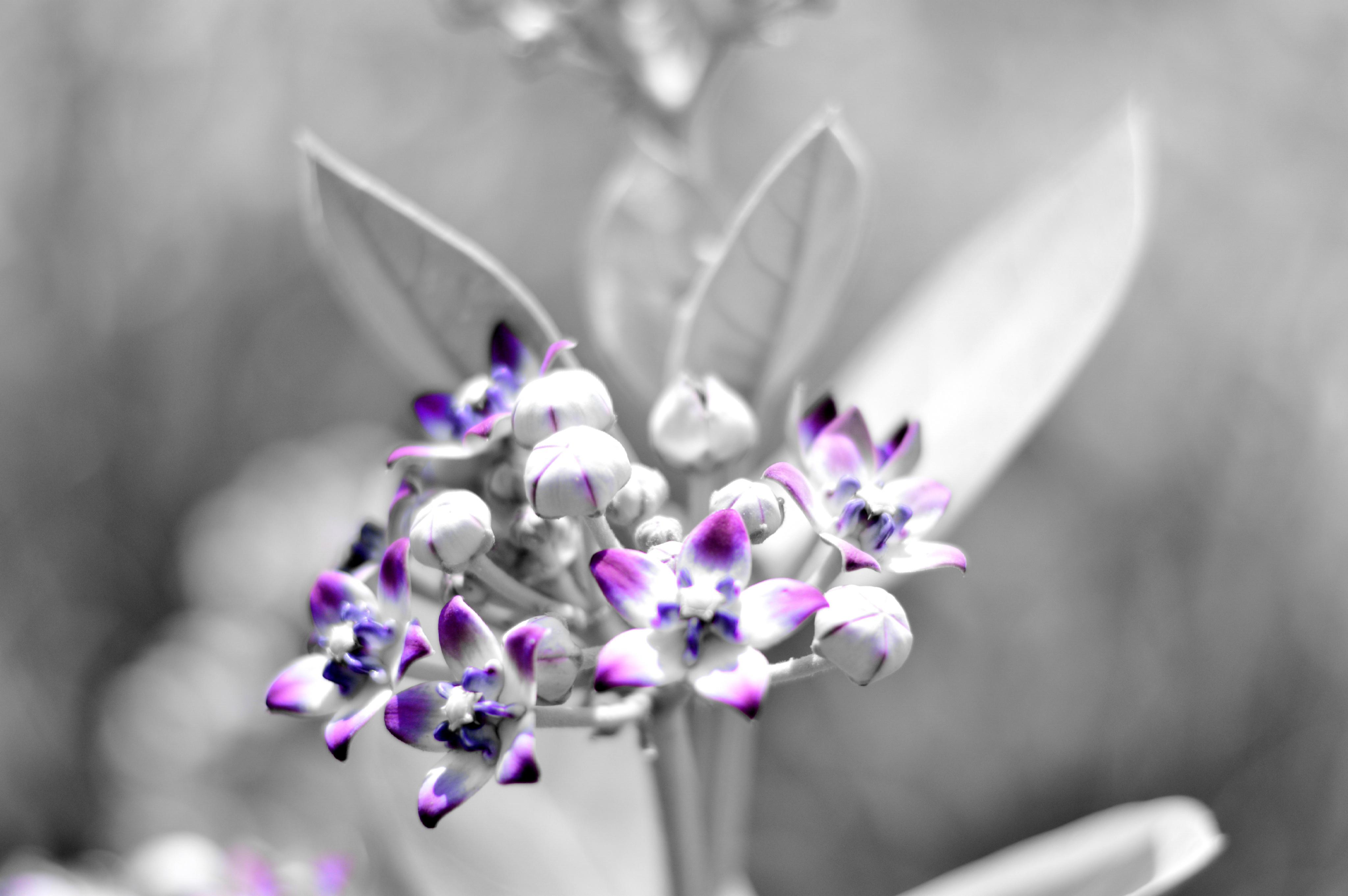 Free Stock Photo Of Blackwhite Black And White Color