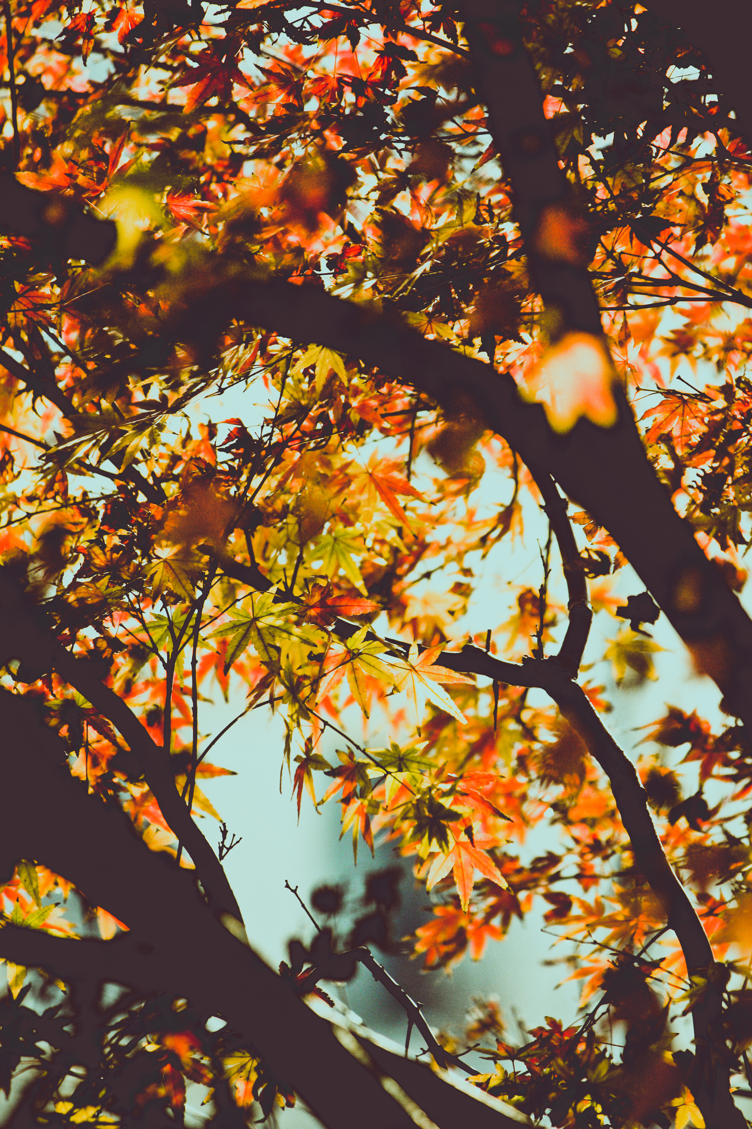 free stock photo of autumn fall leaves