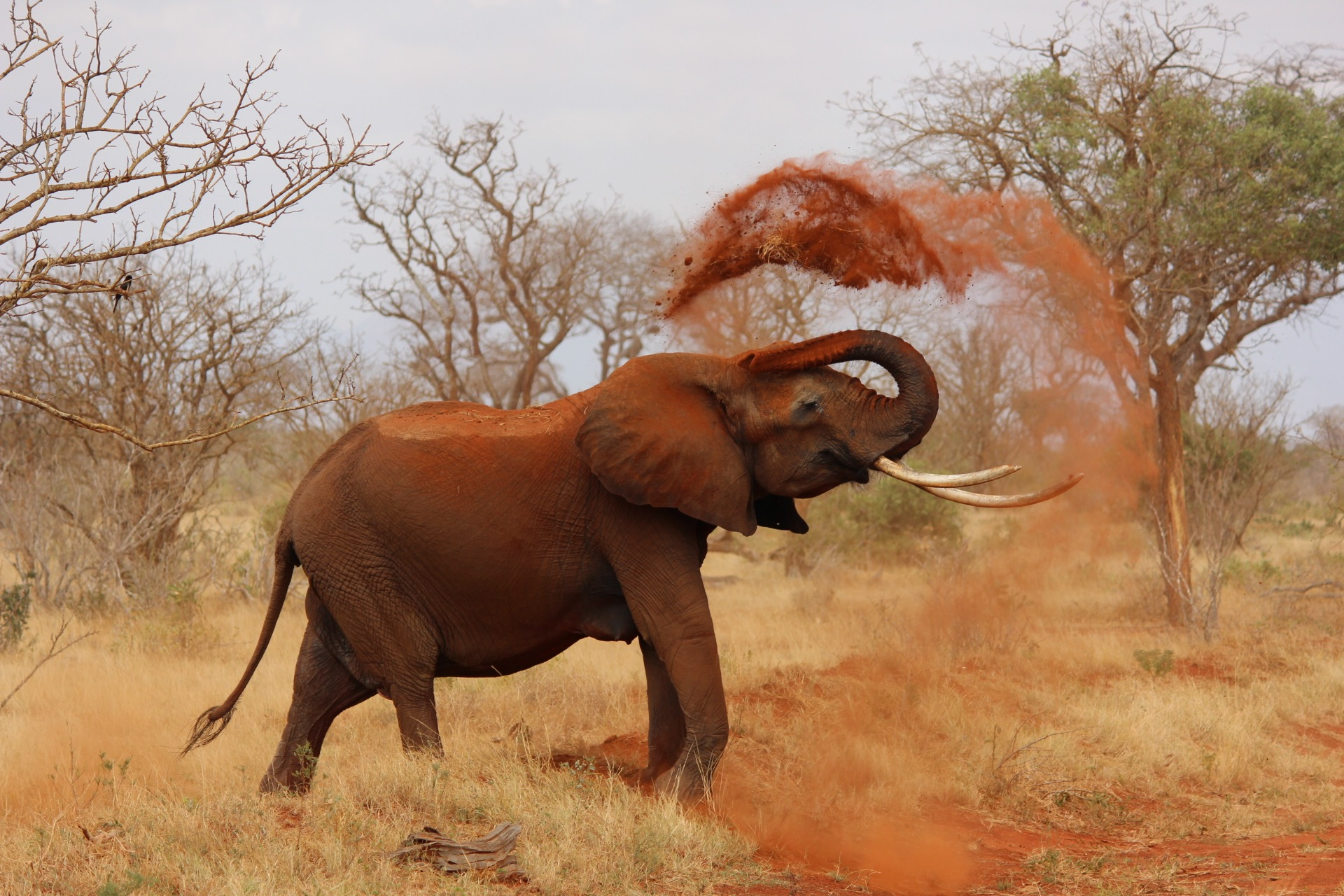 elephant images pexels free stock photos