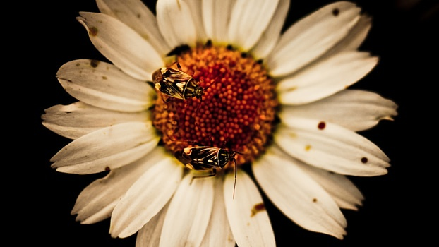 Free stock photo of flower, bees