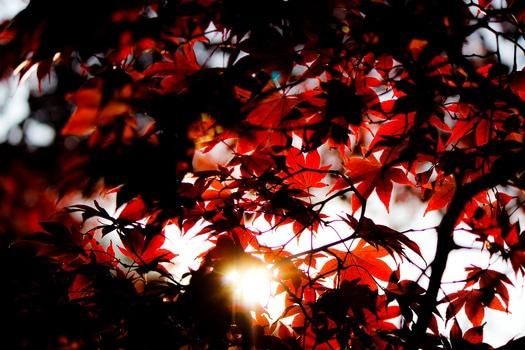 Black and White Leaf Under Sunlight during Daytime