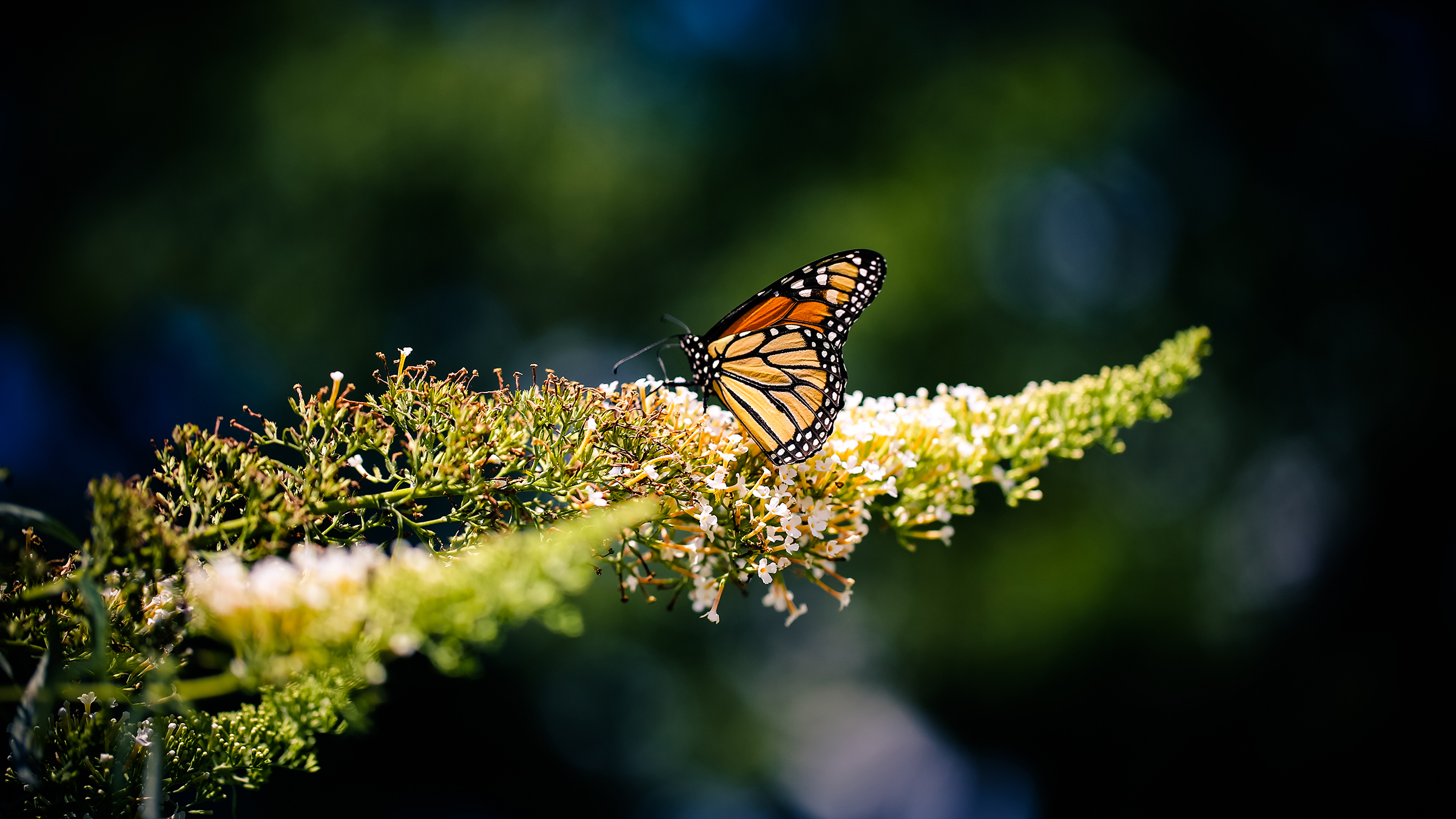free stock photo of animal butterfly insect
