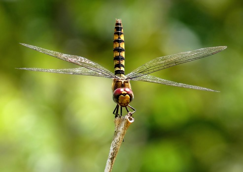 Shallow Focus Photography of Black and Yellow Dragonfly Parched on Brown Tree Trunk during Daytime