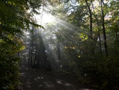 forest, trees, ray of sunshine