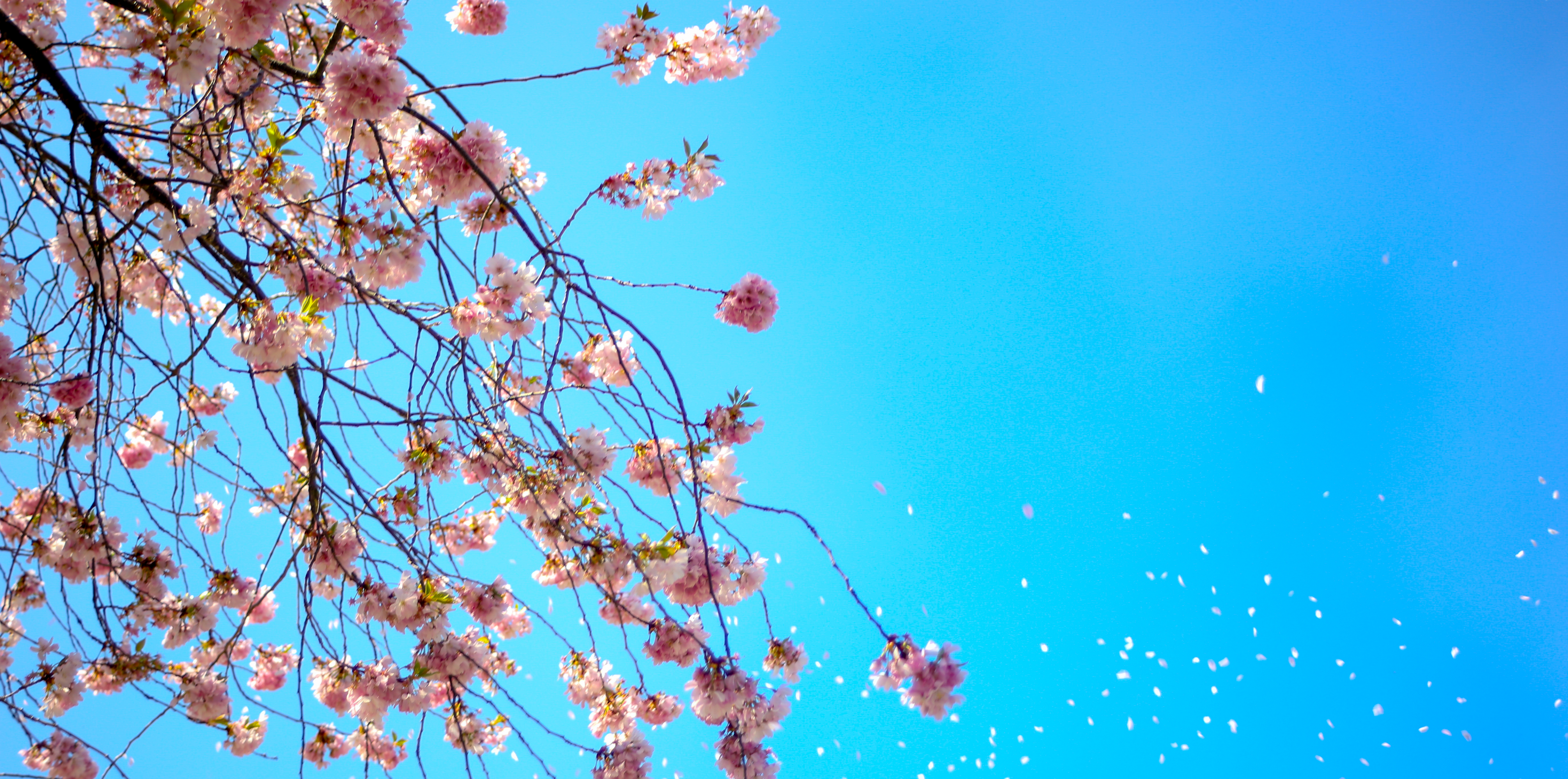 Photo of White and Red Petal Flower Under Blue Sky Free Stock Photo
