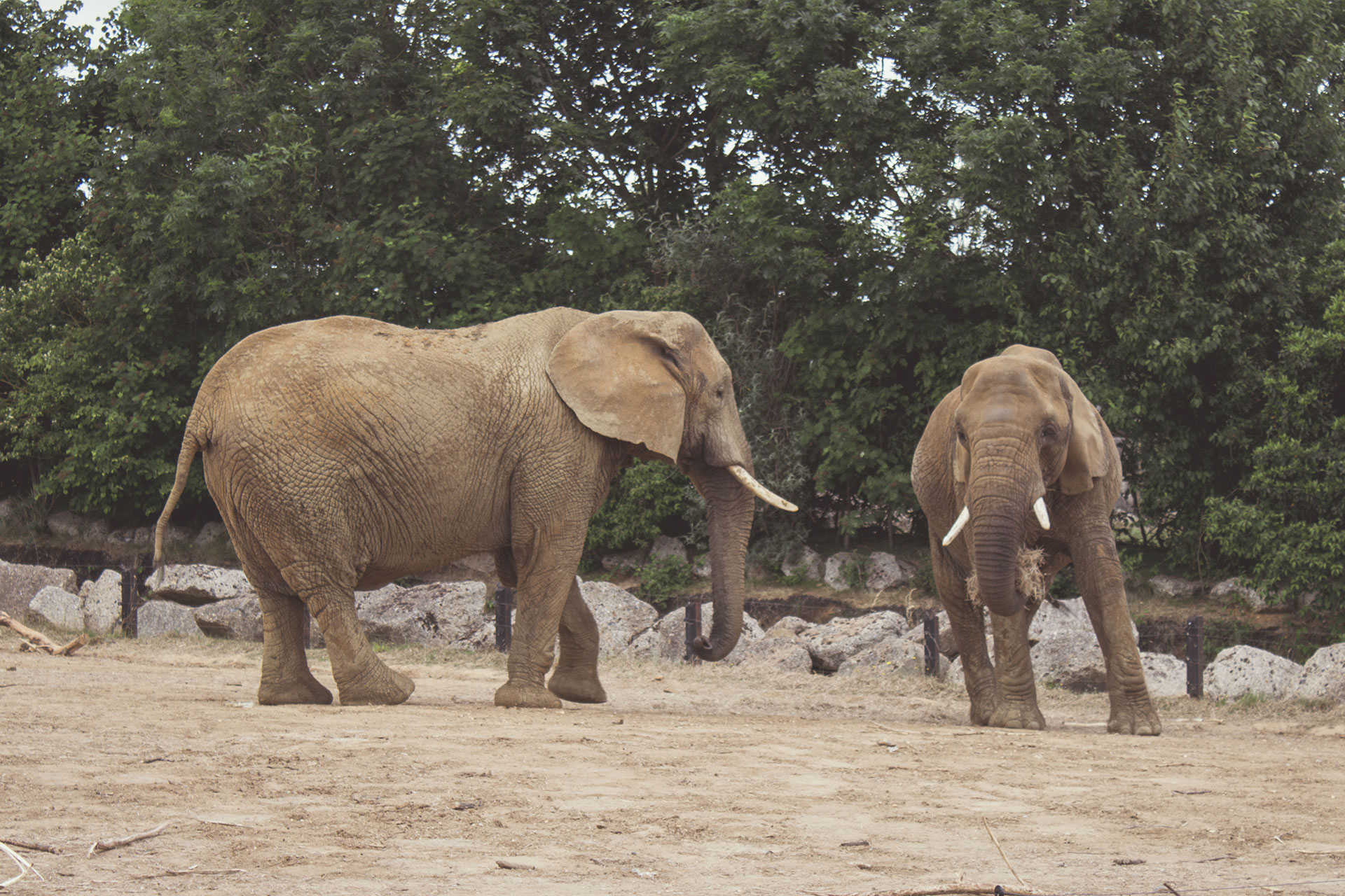 elephants animal africa namibia mozambique wildlife desert elephant zoo niassa african animals reserve rights pexels issues block polar paradise mammal