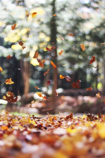 forest, leaves, autumn, fall