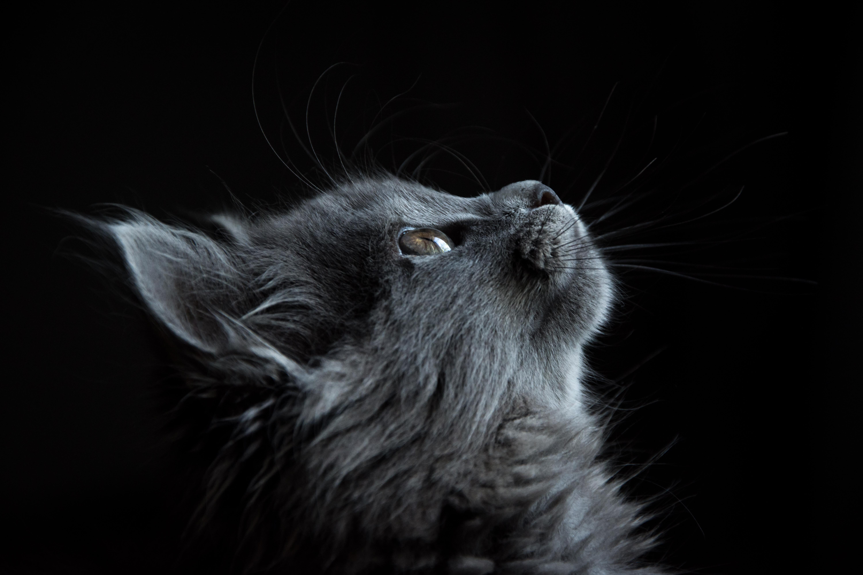 Torrent Cat S Eye
