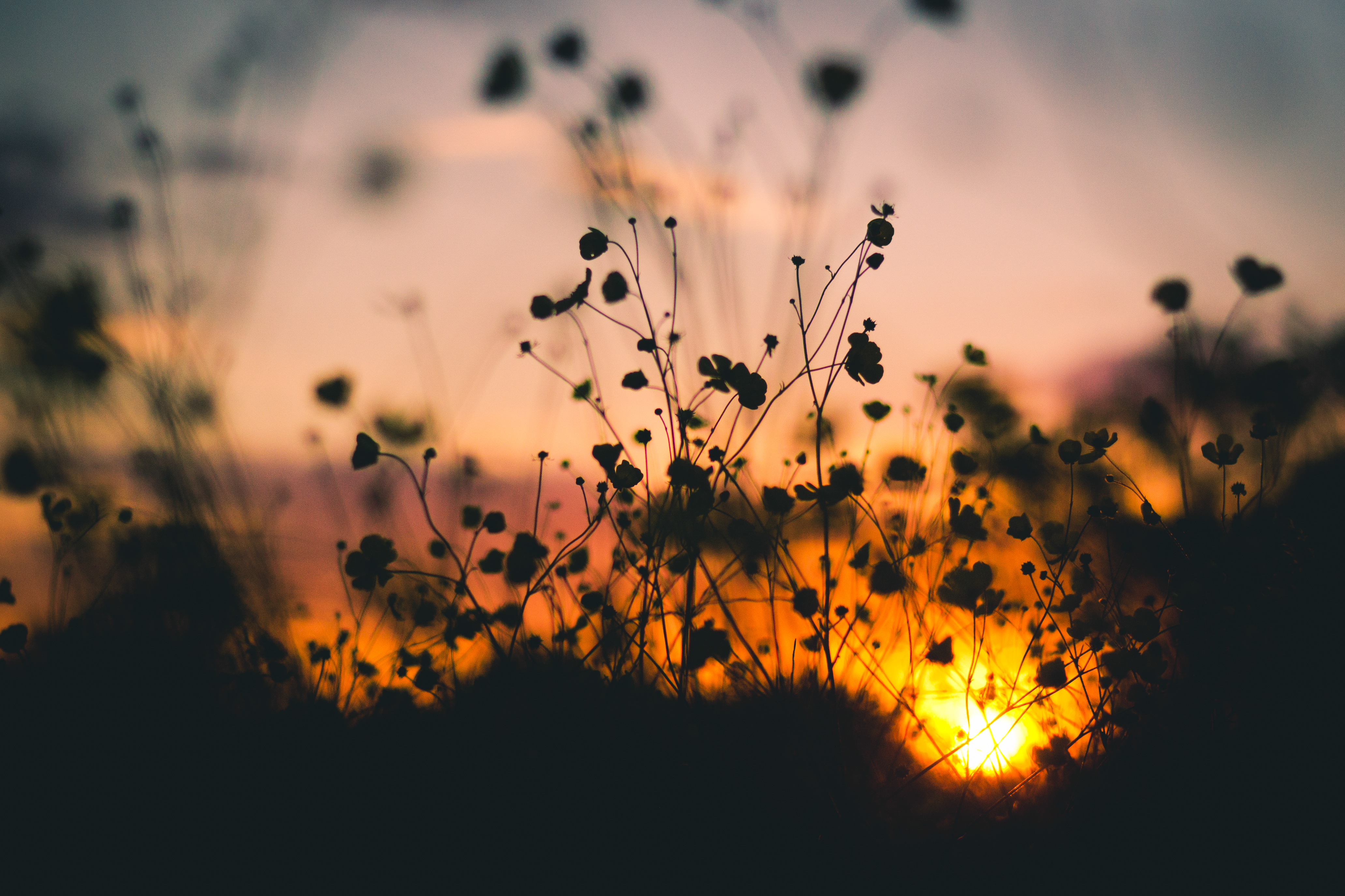 https://static.pexels.com/photos/7314/nature-sunset-flowers-silhouette.jpg