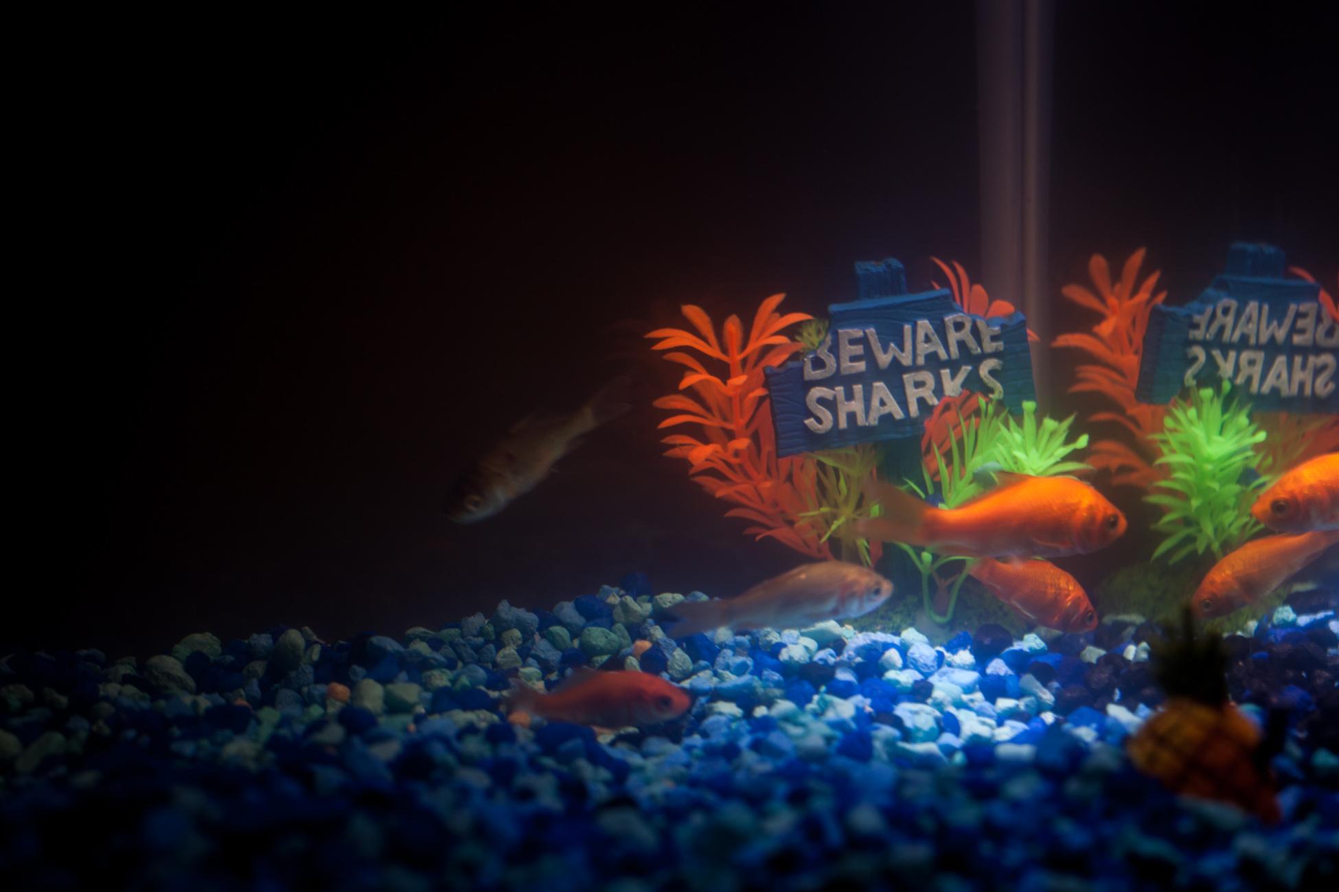 Aquarium fish tank download - Free Download