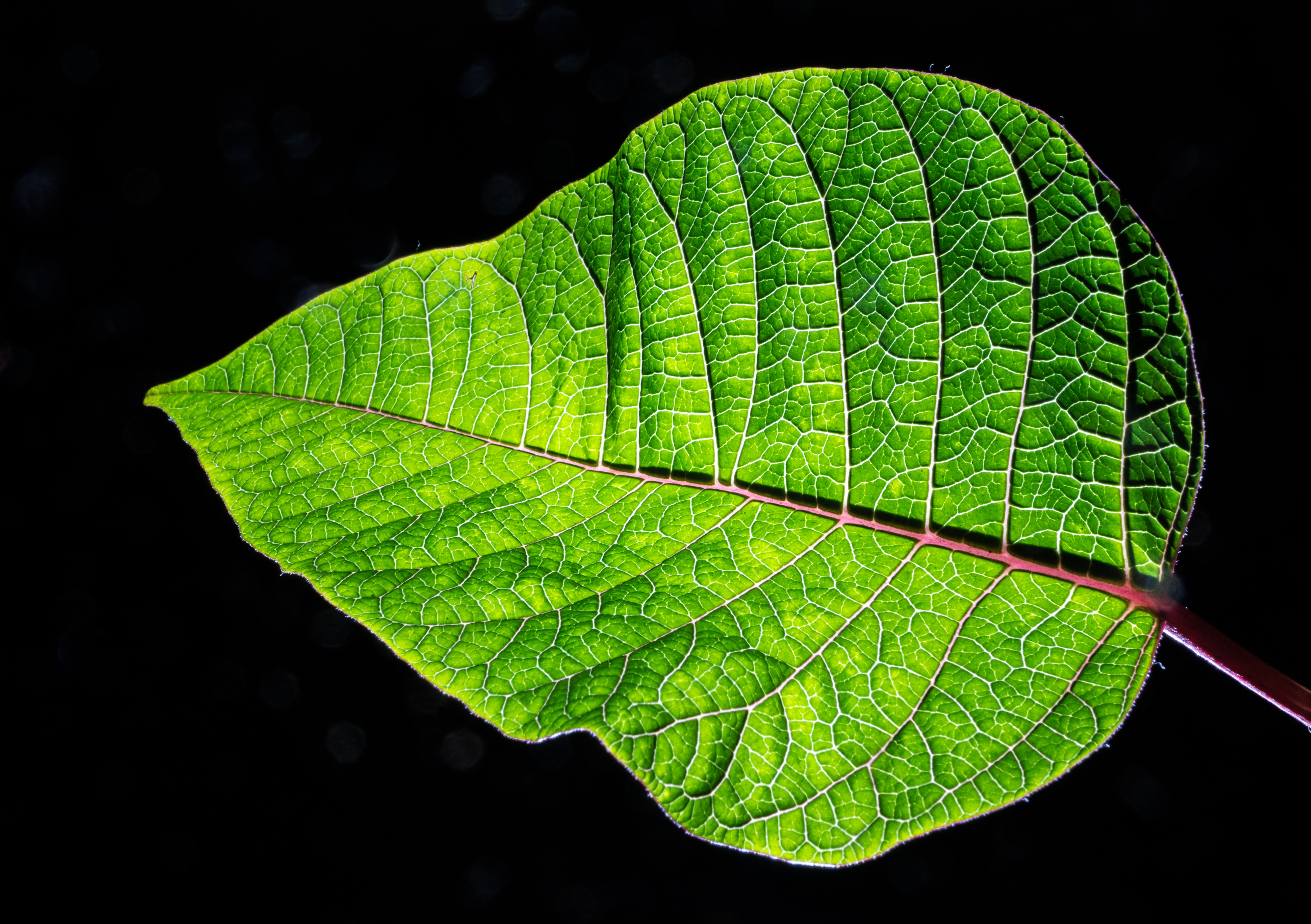 Green Leaf Plant · Free Stock Photo