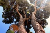 nature, sunny, lens flare