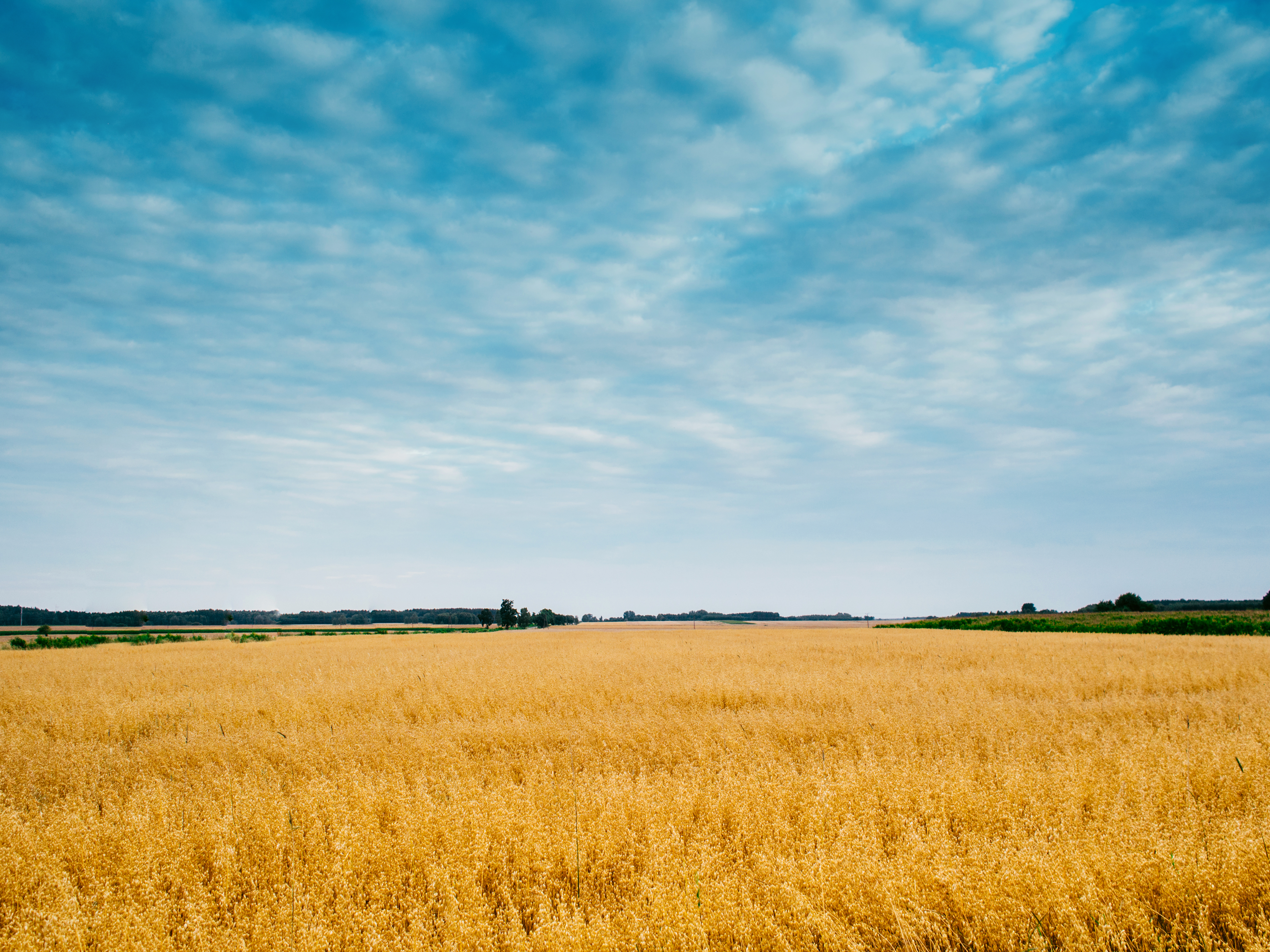 field pictures pexels free stock photos