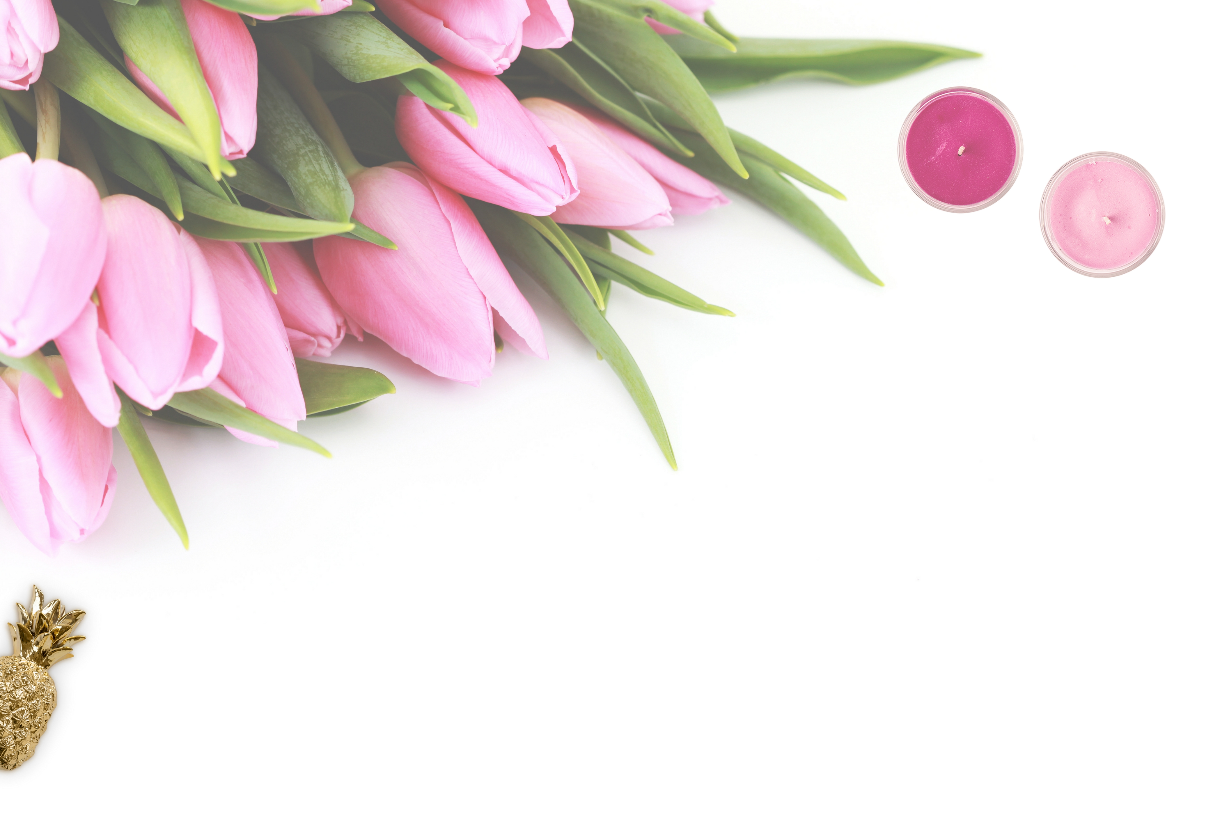pink tulip flowers with white background 183 free stock photo