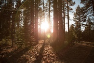 nature, sunny, forest