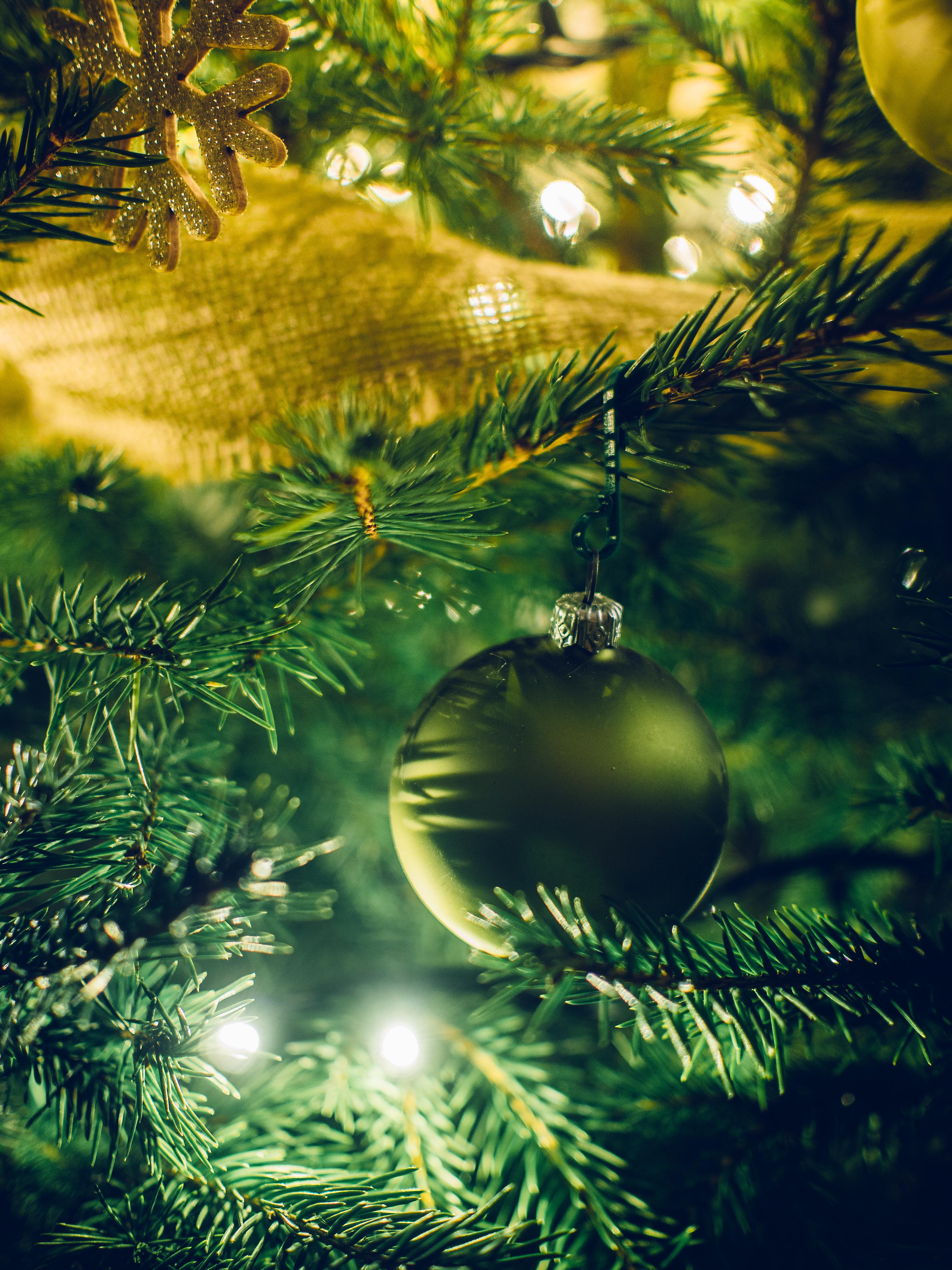 free stock photo of christmas lights christmas tree close up