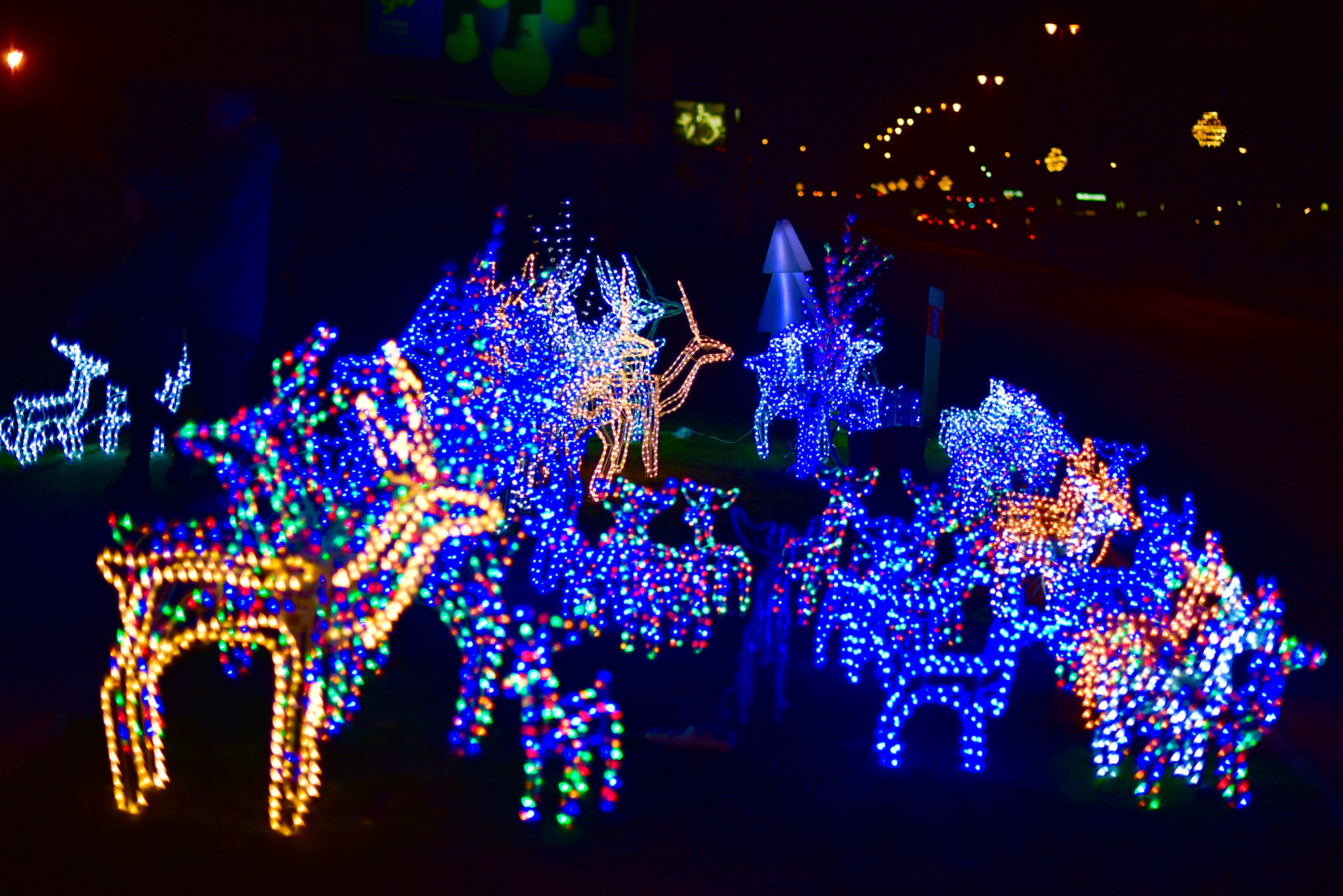 free stock photo of christmas theme light