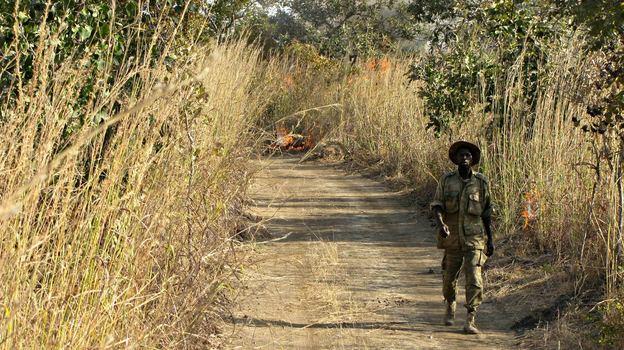 Free stock photo of man, person, walking, path