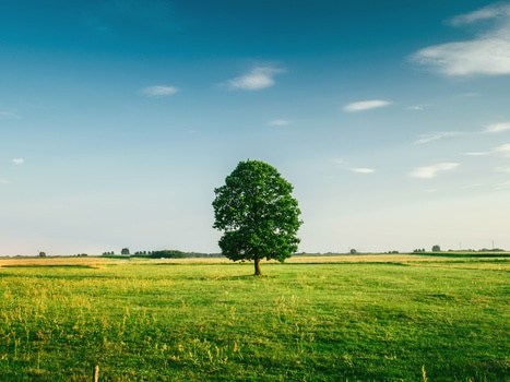 Tall Tree on the Middle of Green Grass Field during Daytime