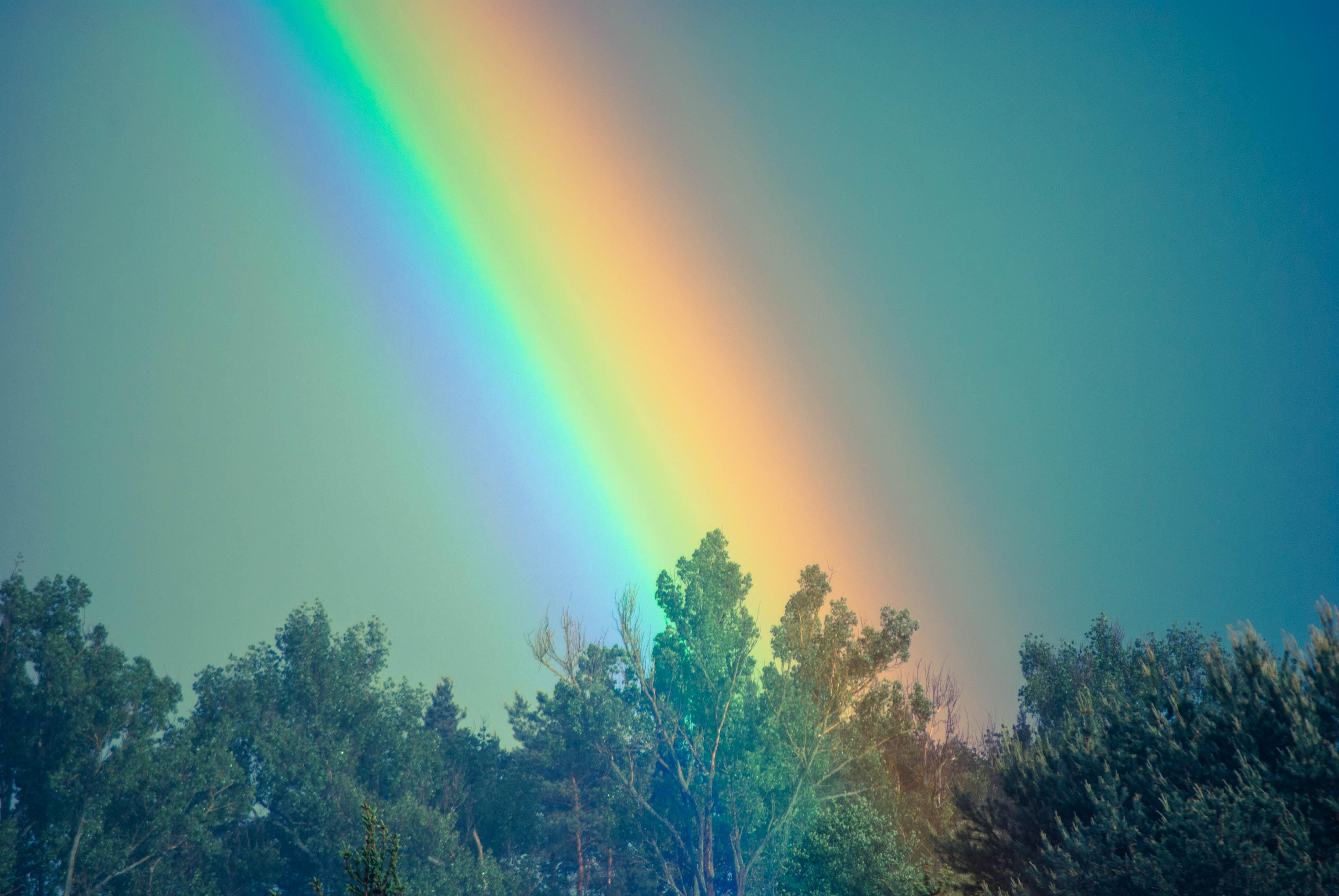 free stock photo of rainbow sky trees