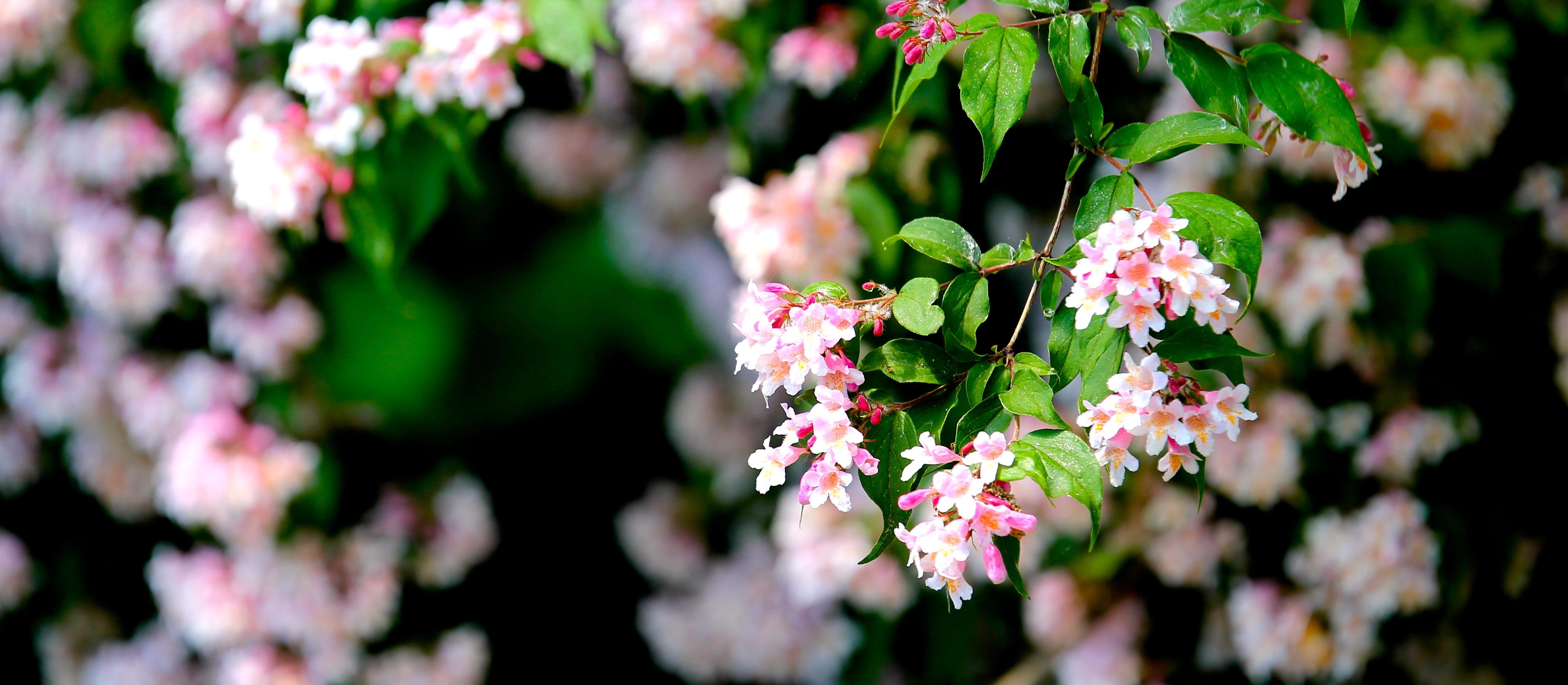 flower-flowers-nature-macro-83129.jpeg (4272×1865)