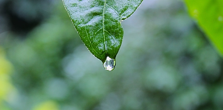 Free stock photo of nature, plant, leaf, rain