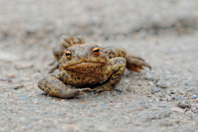 frog free stock photo