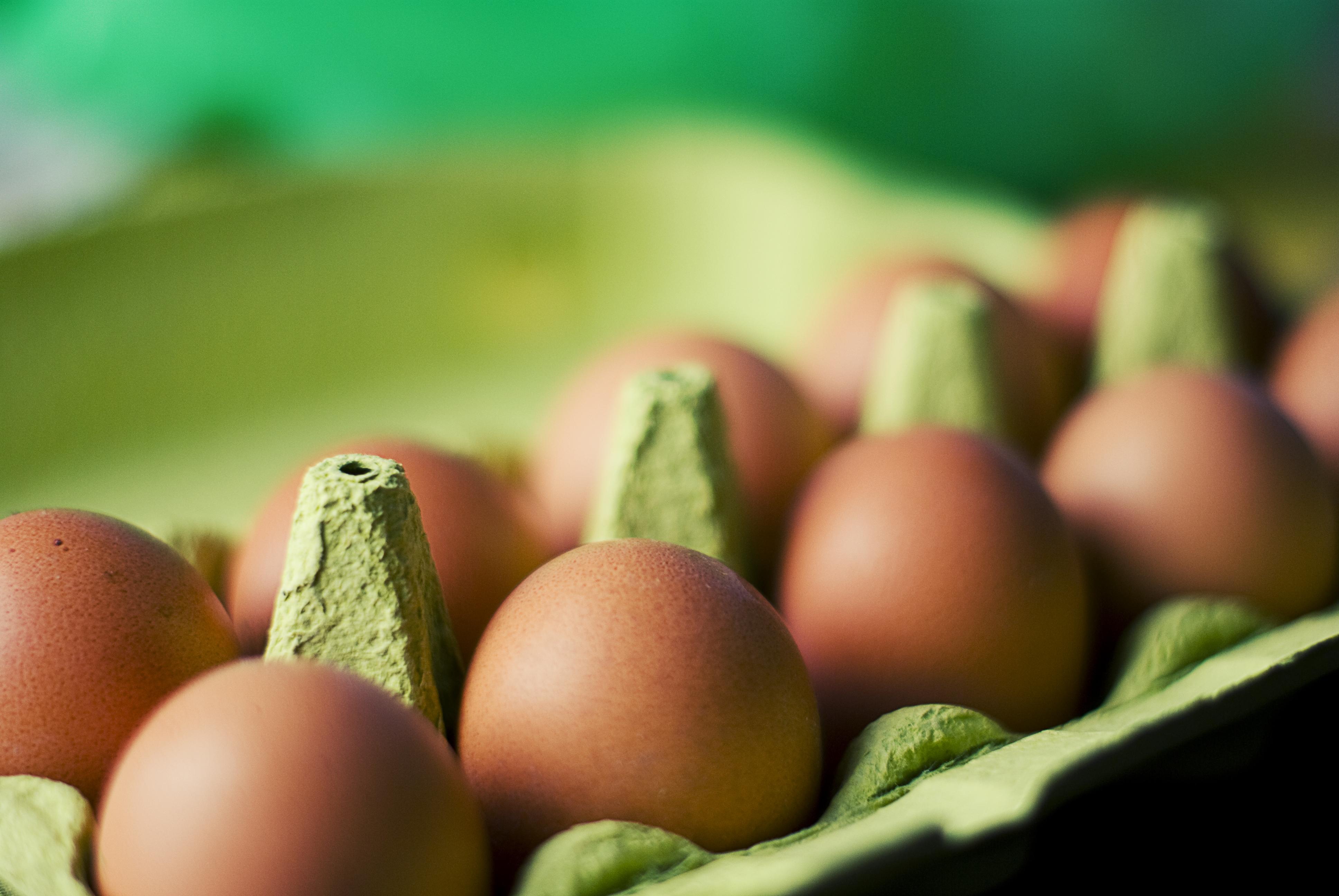 Výsledok vyhľadávania obrázkov pre dopyt eggs