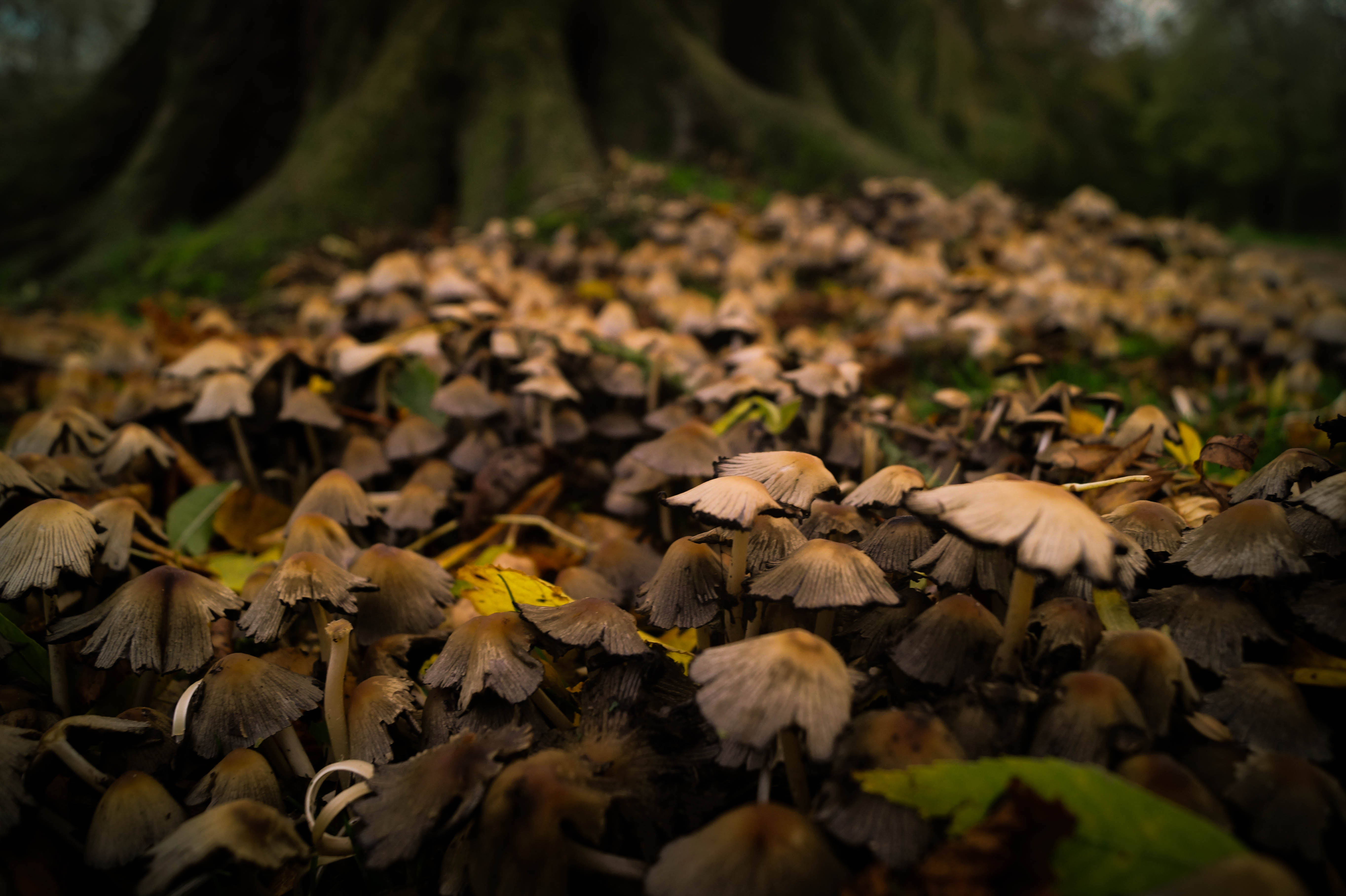 Free stock photo of autumn forest fungi for Forest floor definition