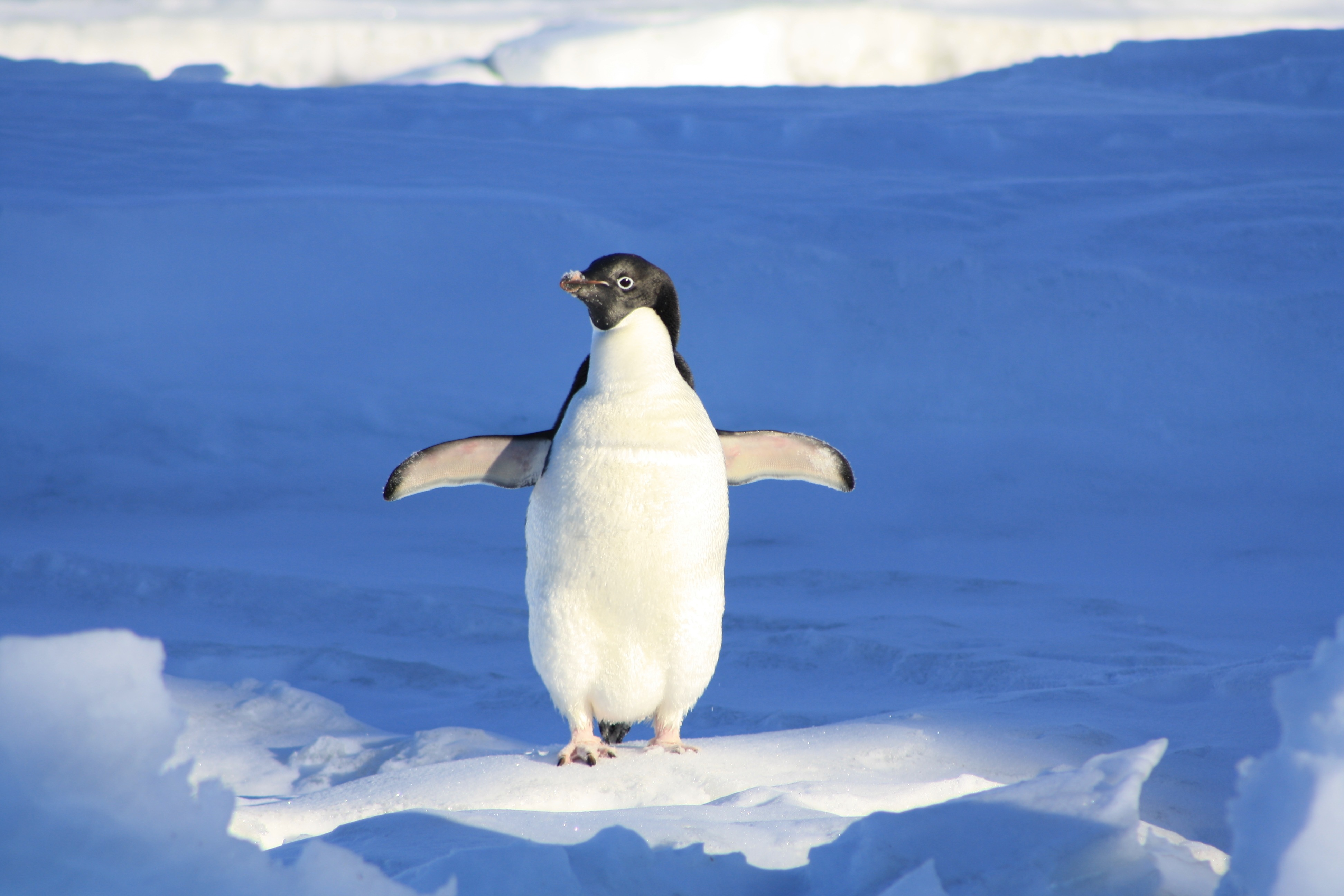 This Penguin Totally Beat Those Winter Blues