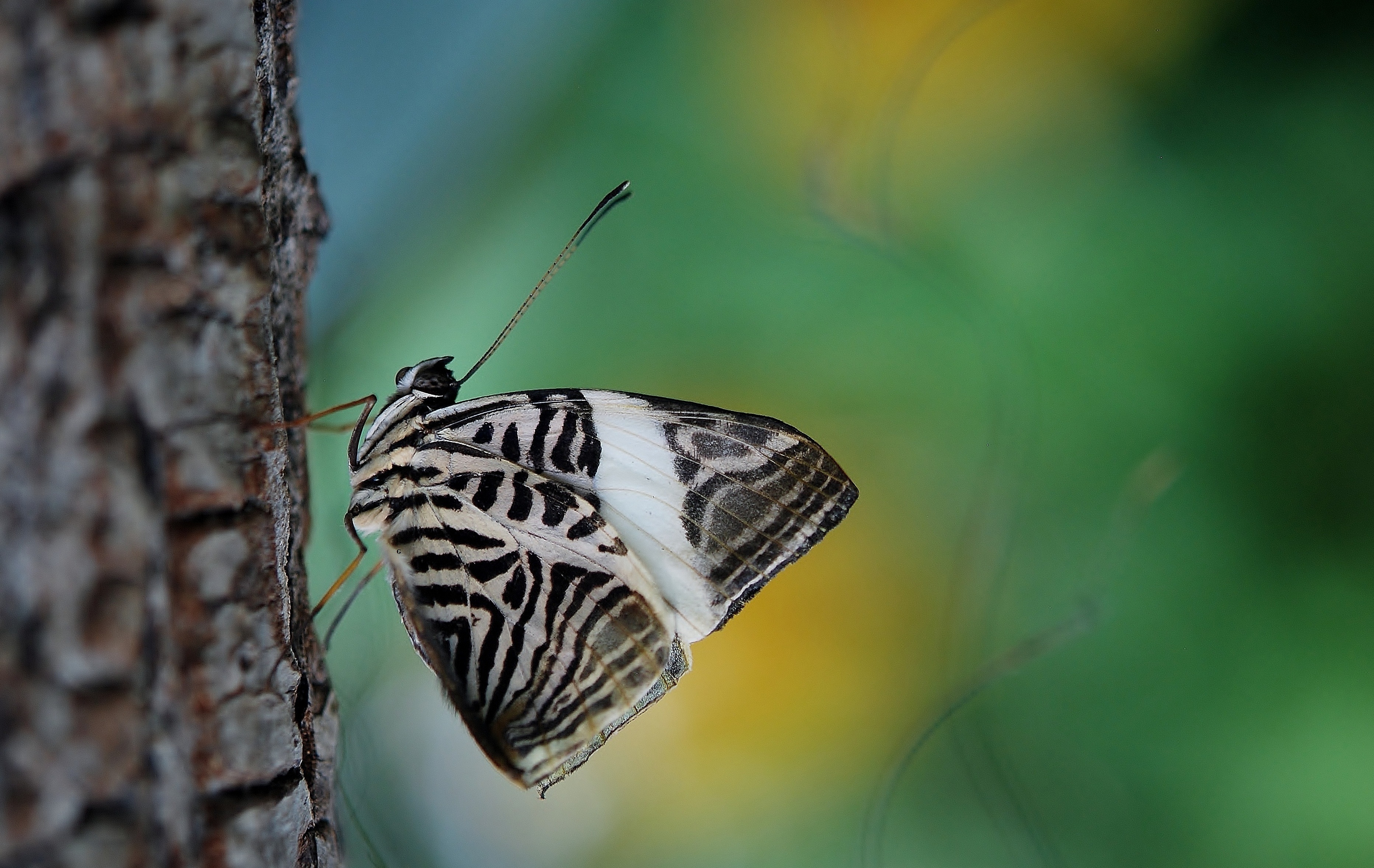 free stock photo of butterfly close up hd wallpaper