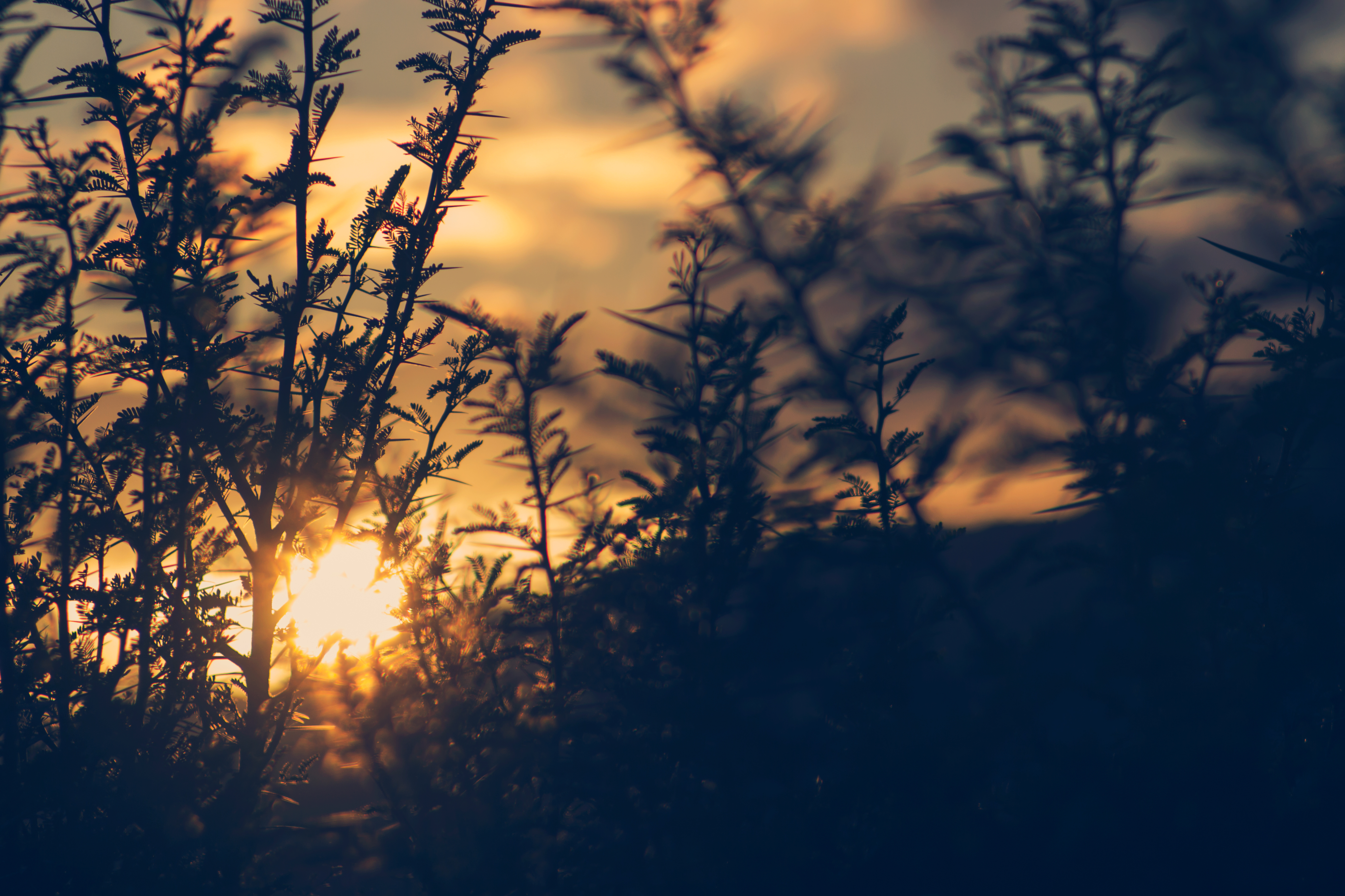 Silhouette of plant during sunset free stock photo - Photos wallpaper ...