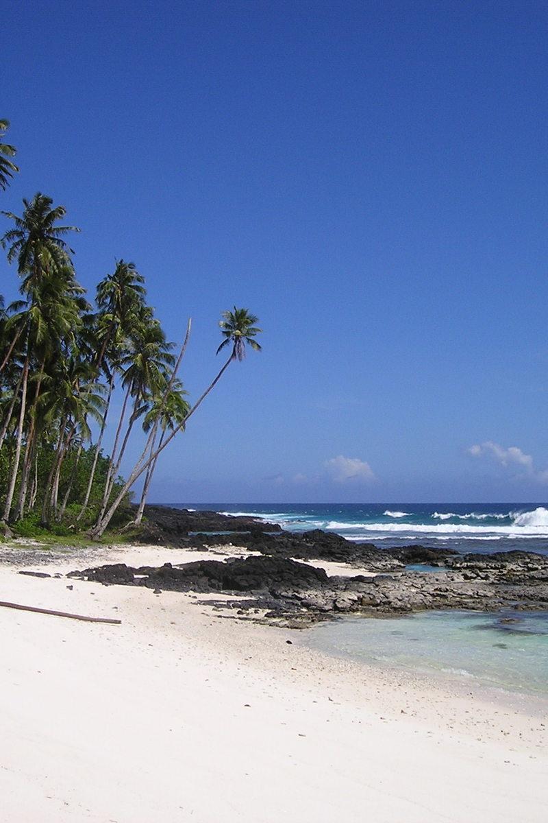 Green Palm Tree Near Beach Under Clear Blue Sky · Free