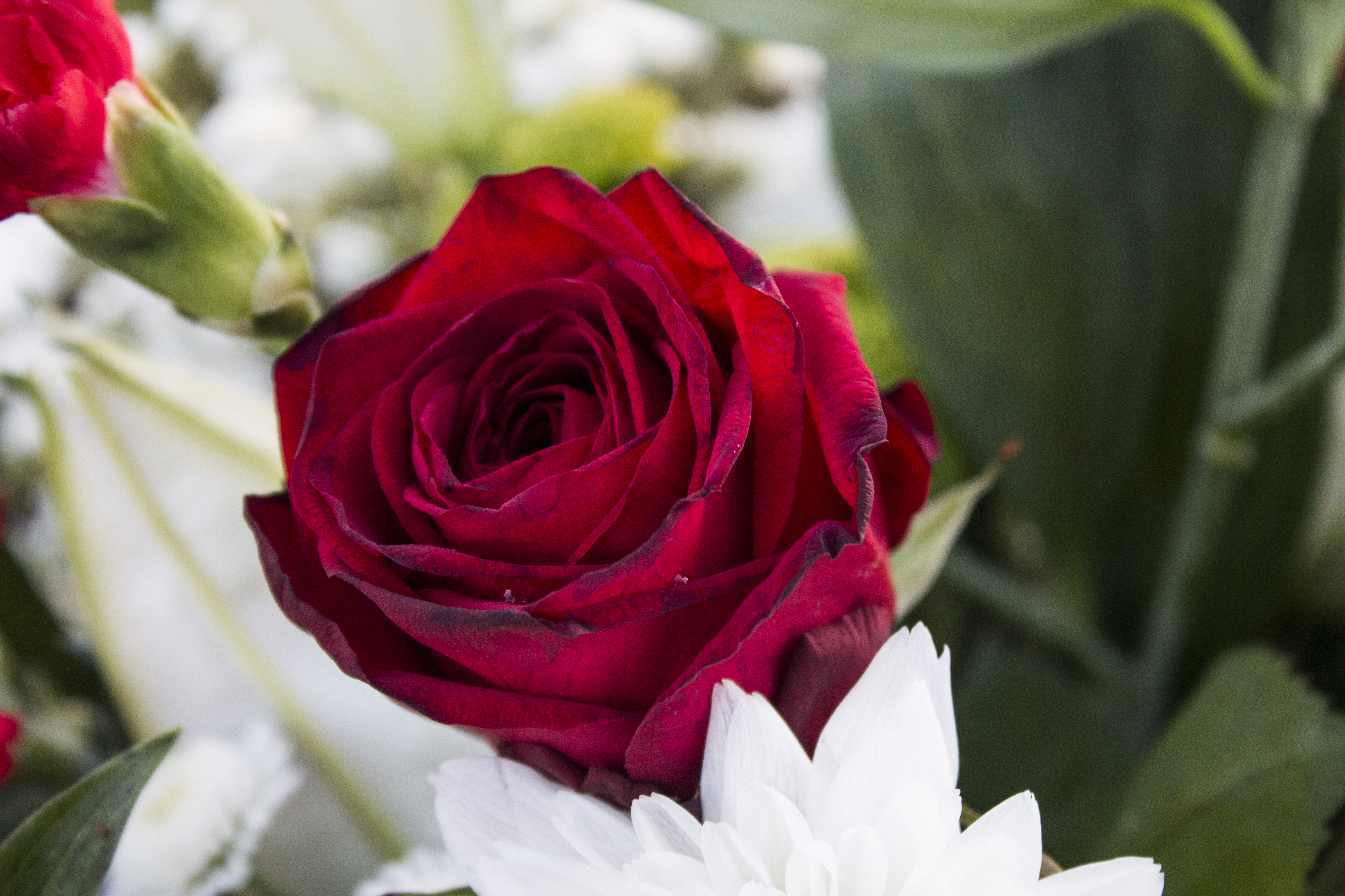 Beautiful Love Flowers Pictures Ideas Natural Flower