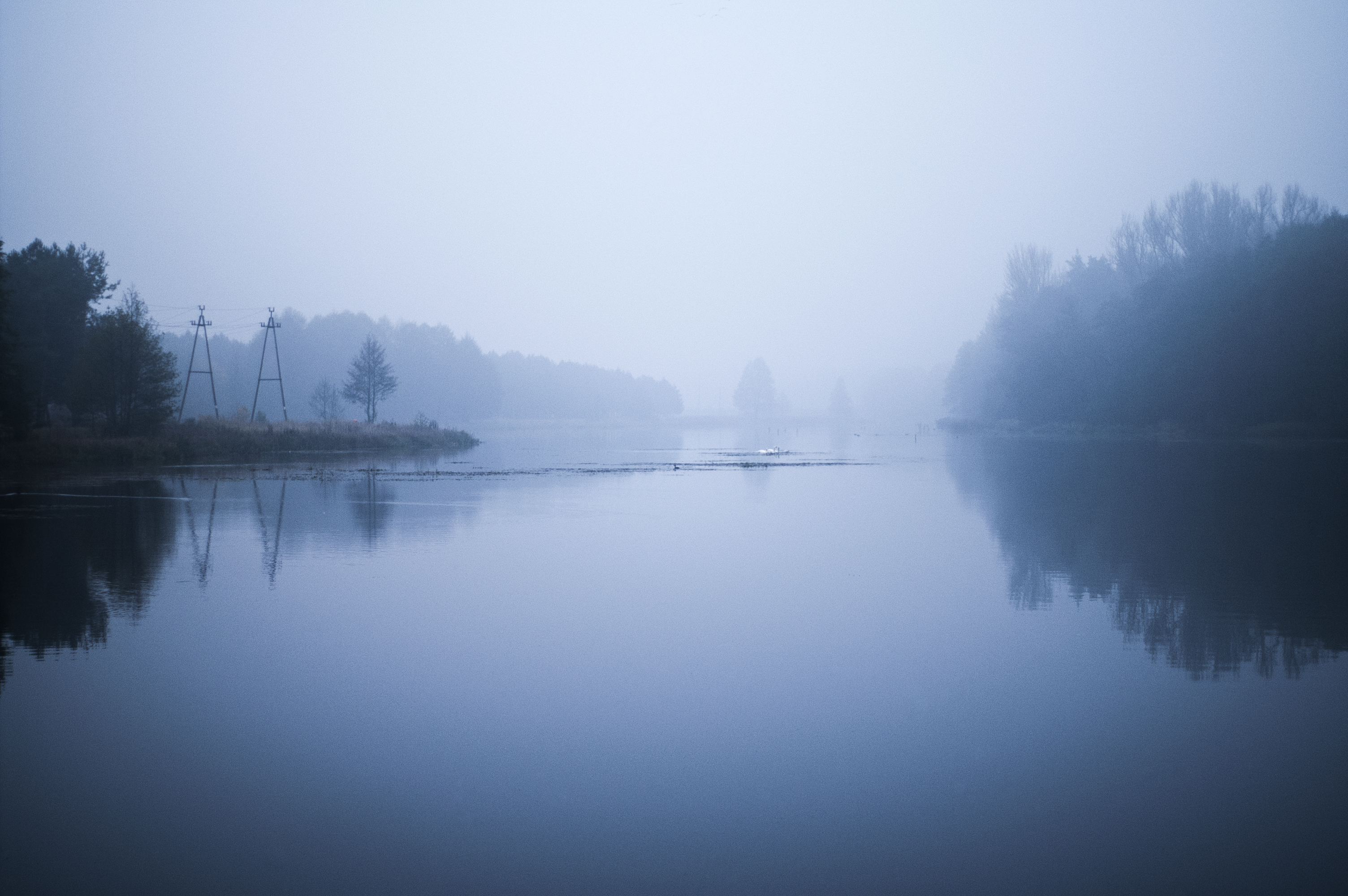 foggy forest desktop wallpaper