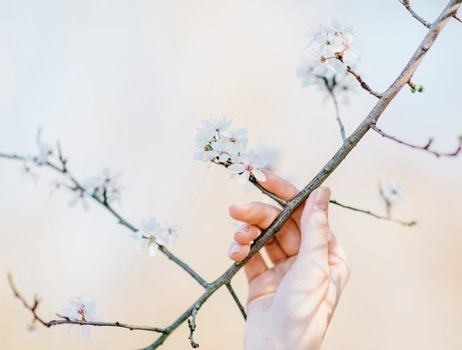 Person Holding the Stem of White Petaled Flower at Daytime