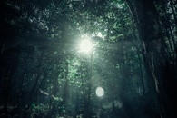 nature, sun, forest