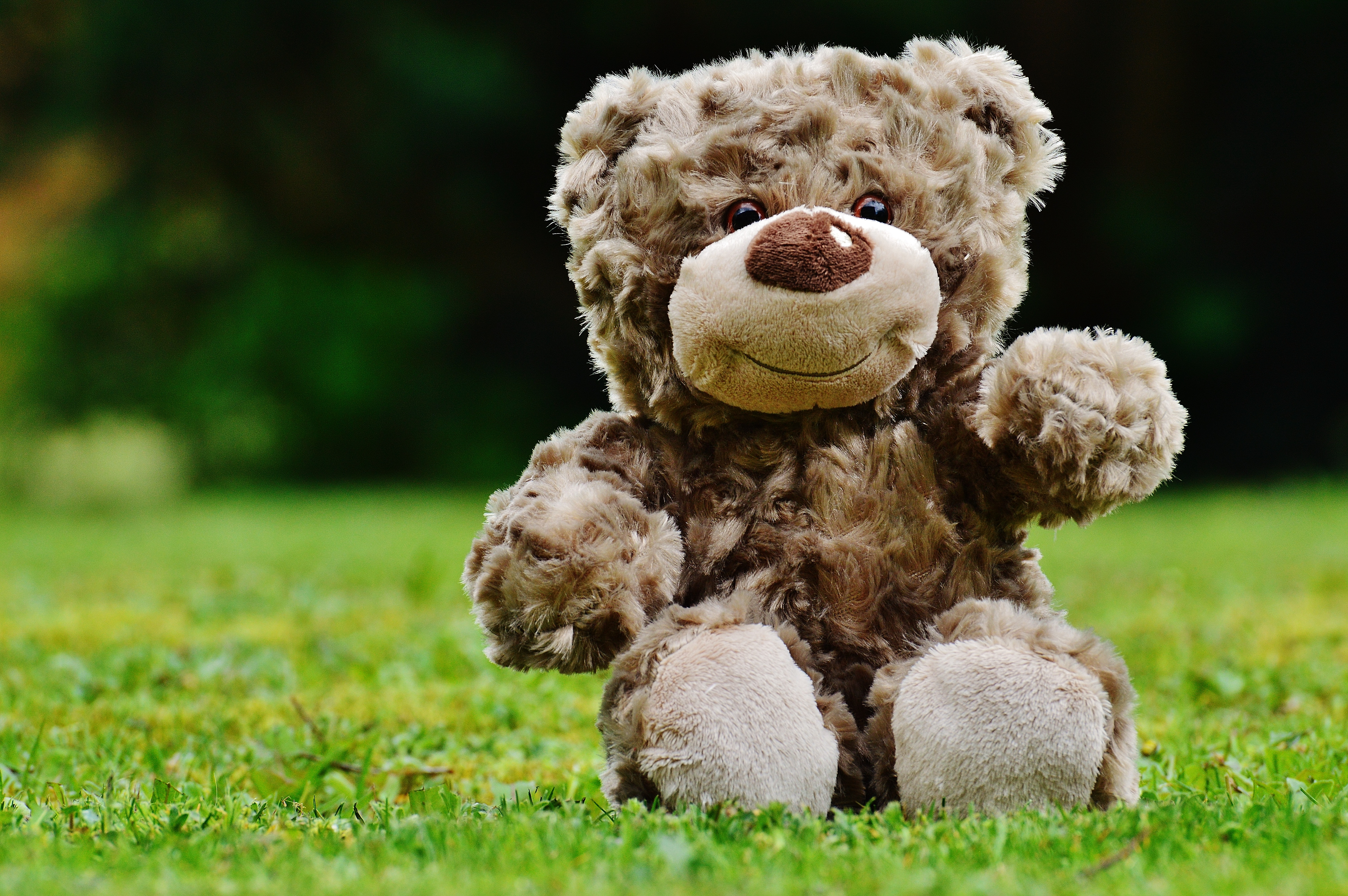 brown teddy bear sitting on grass free stock photo