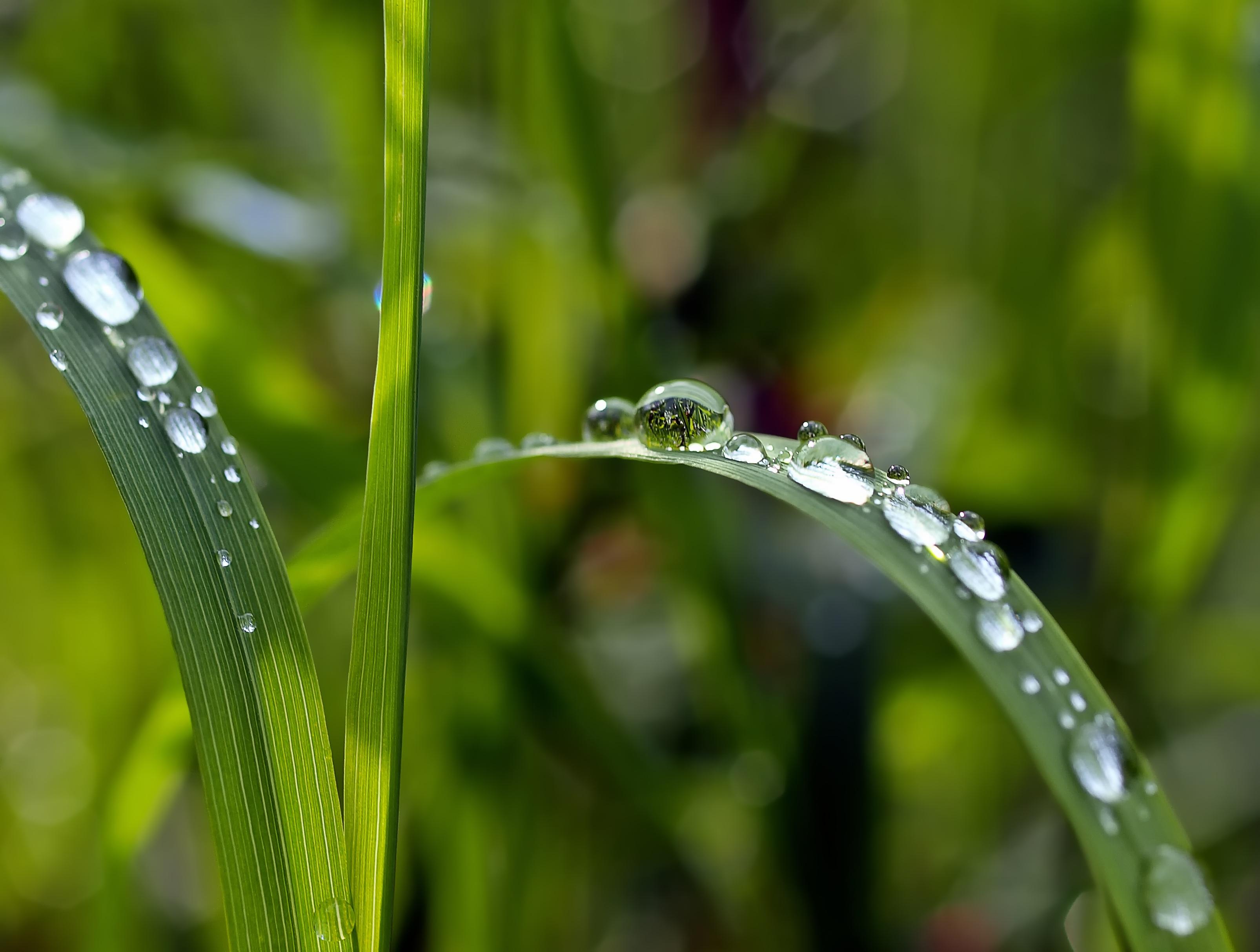 grass macro photography - photo #28