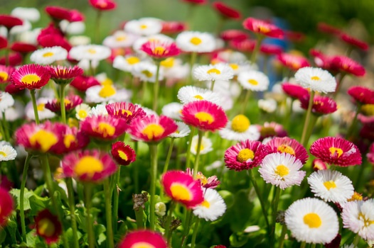 A free stock photo of a lawn with colorful flowers.