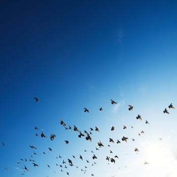 Free stock photo of sky, flying, animals, birds