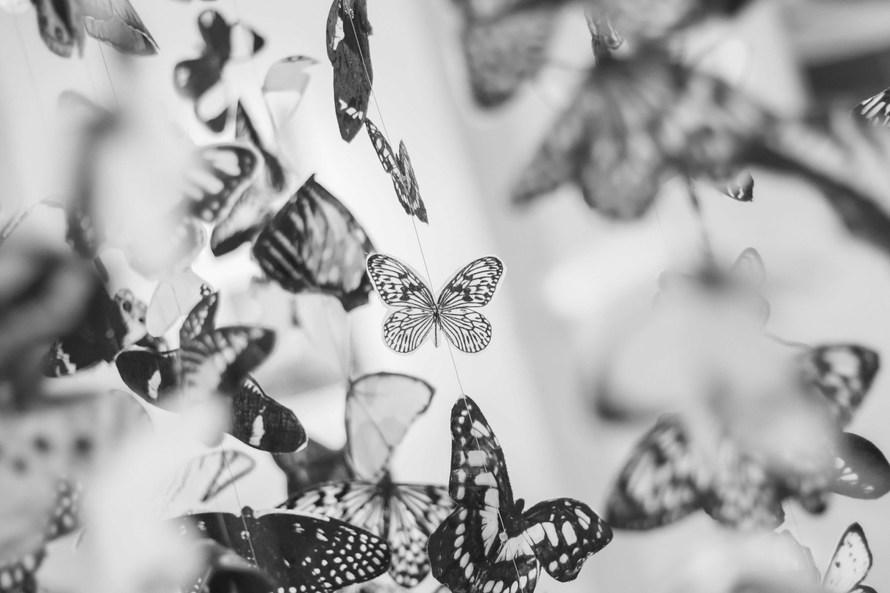 blanco y negro, mariposas, decoración