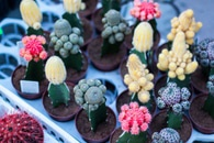 plants, cacti, flowering plant