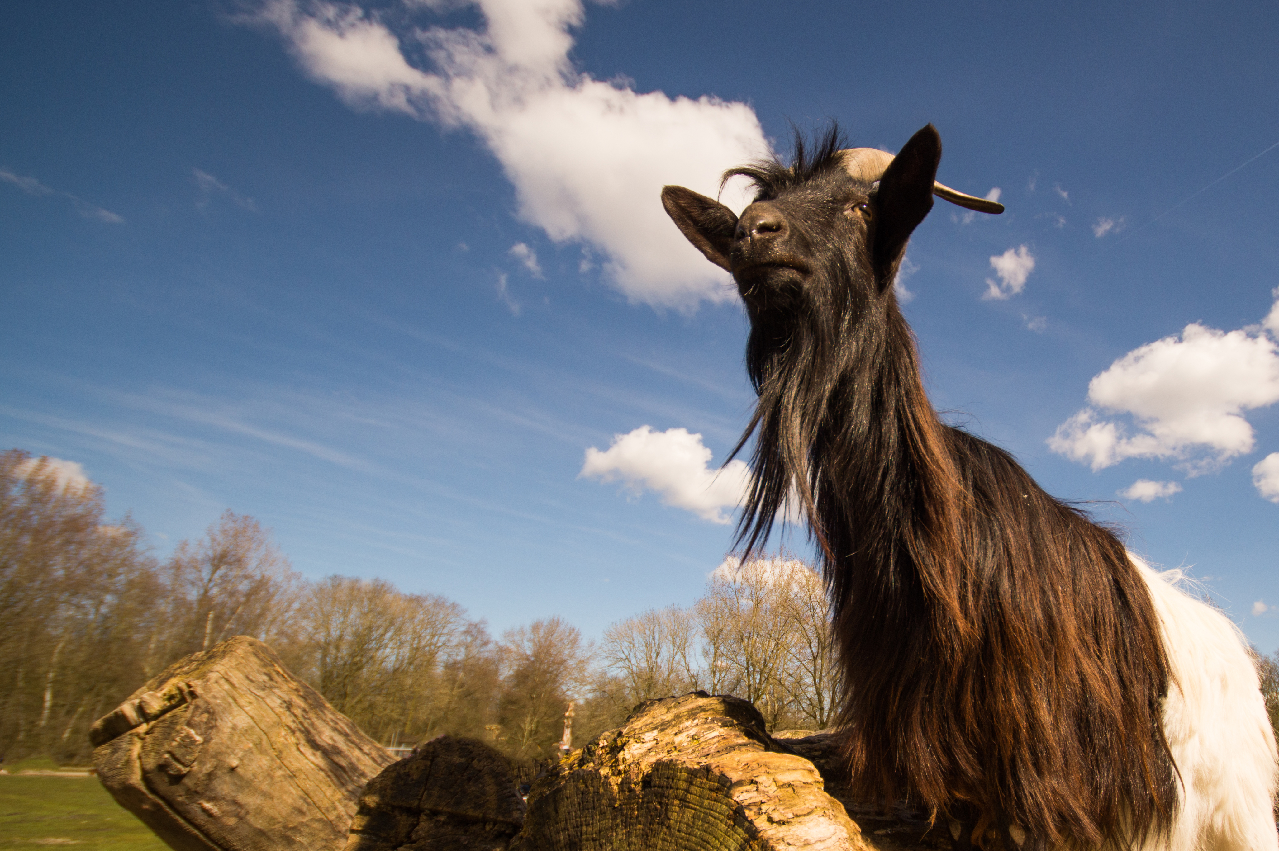 what does goat mean plus 5 goats we should all learn from admire
