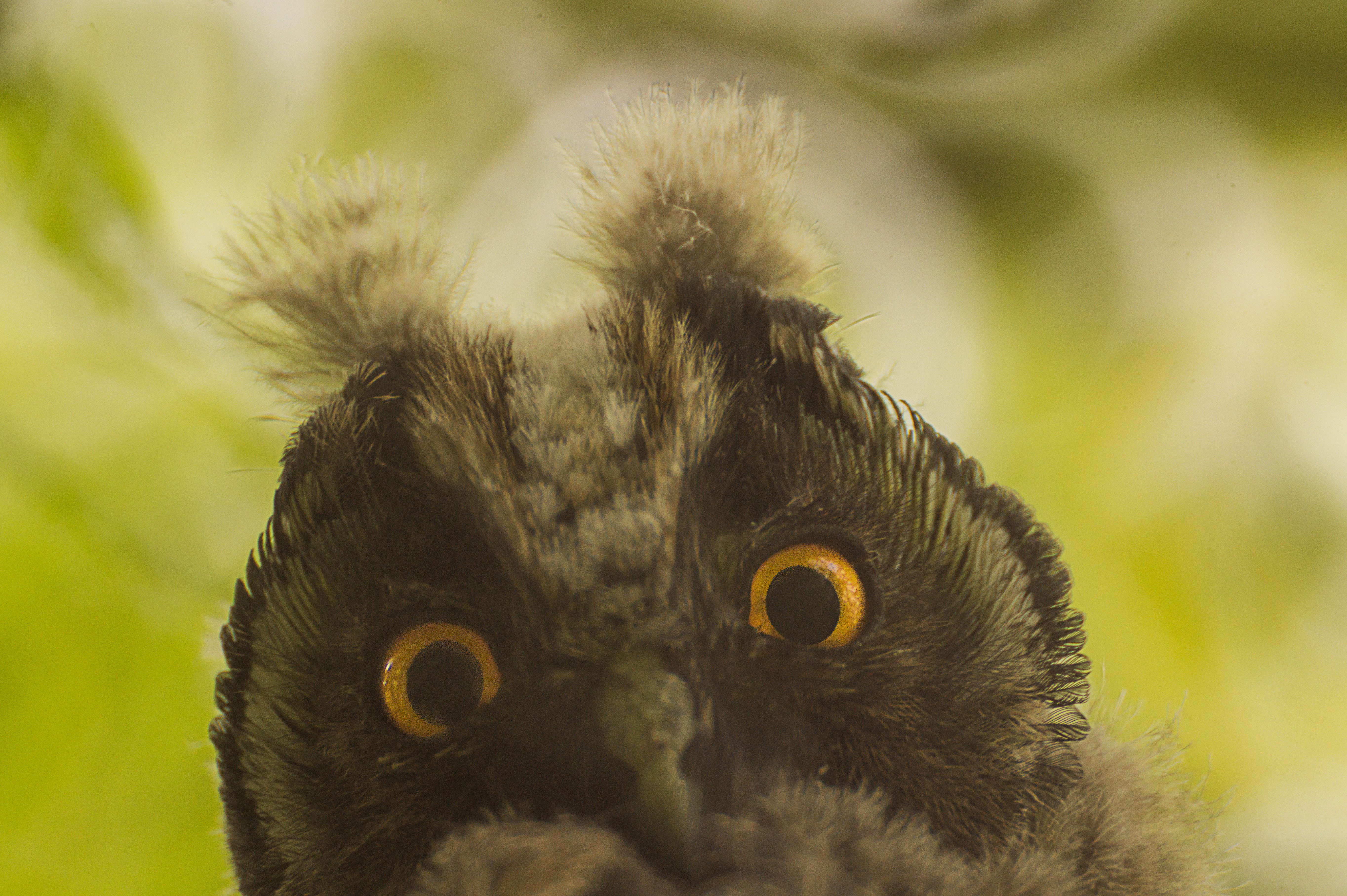 owl pictures pexels free stock photos